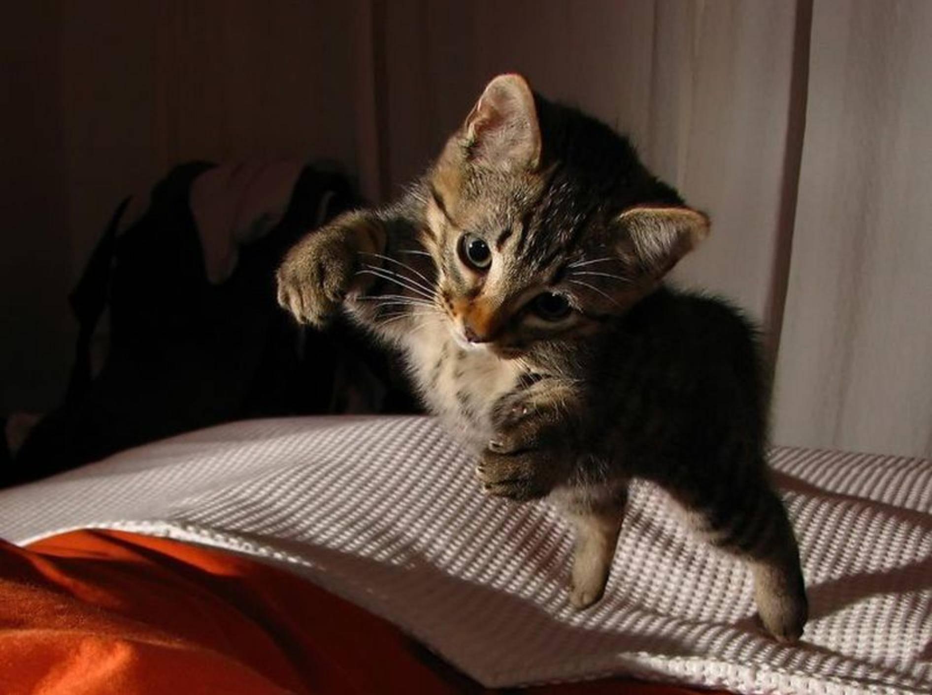 Katze-Bett-Springt
