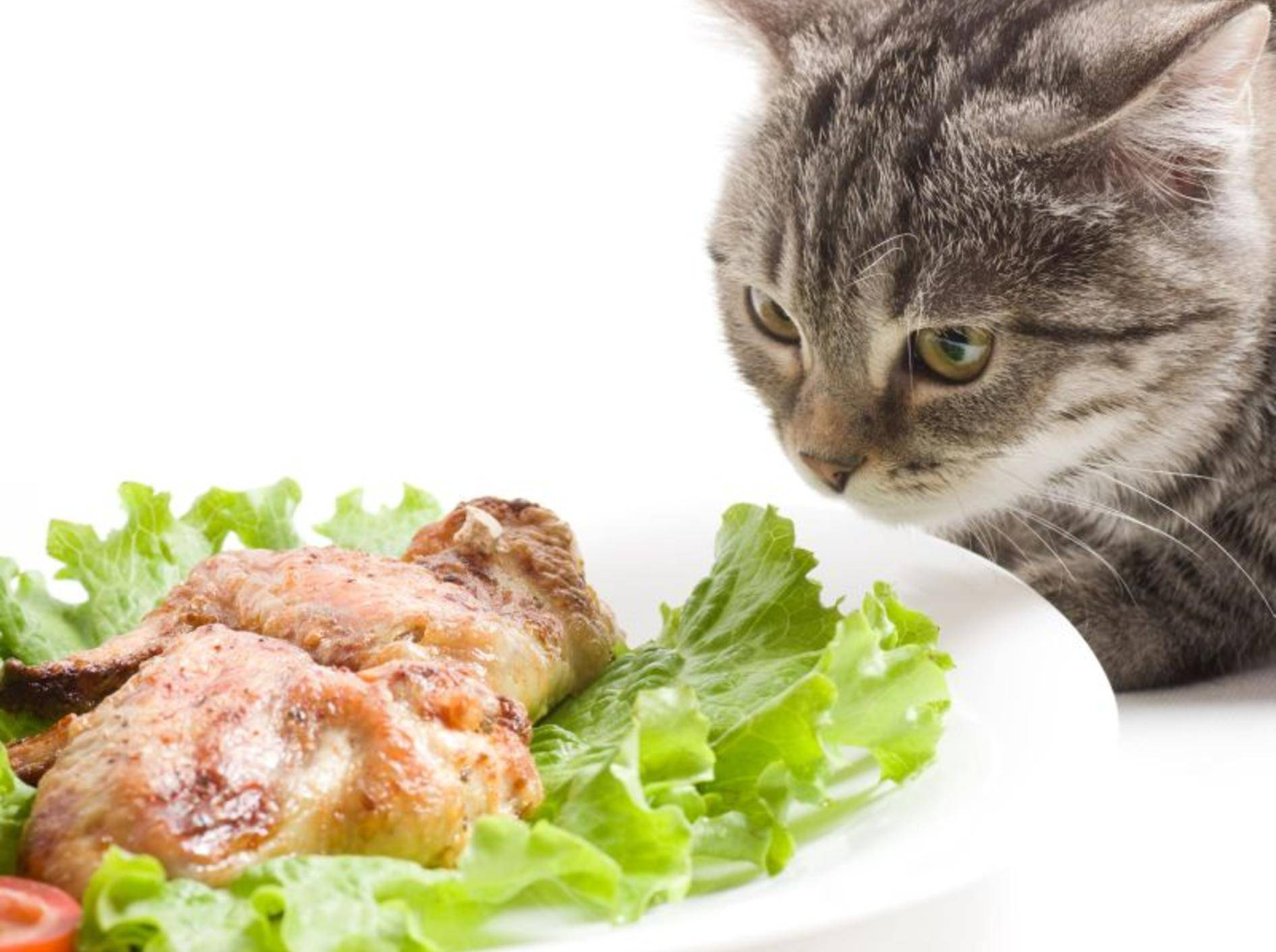 Getigerte Katze mit Salat und Fleisch