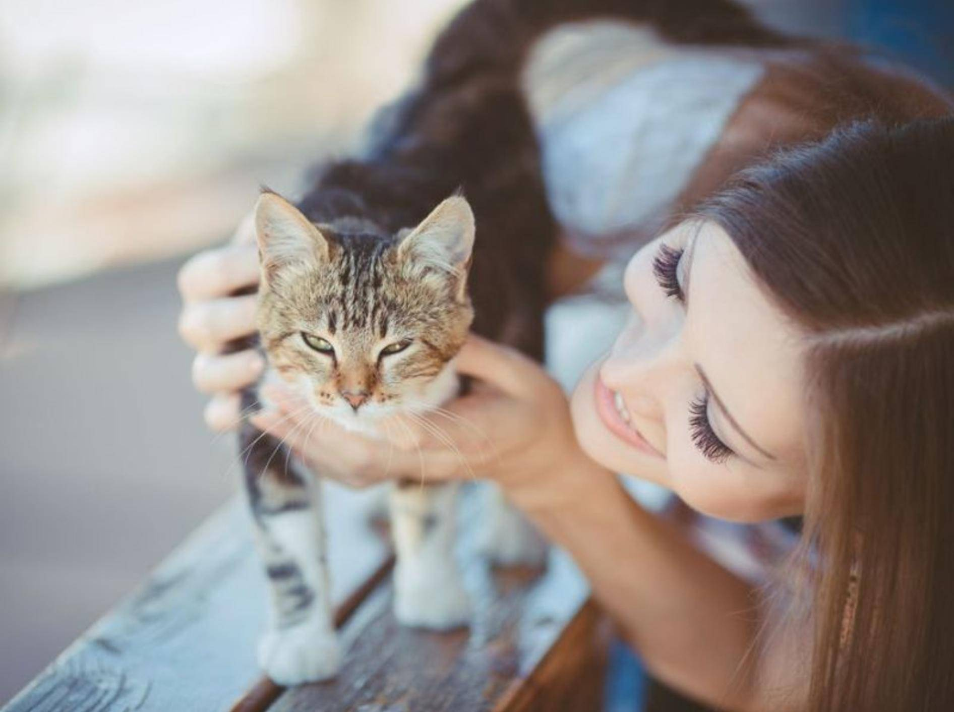 Junge Katze mit Frau