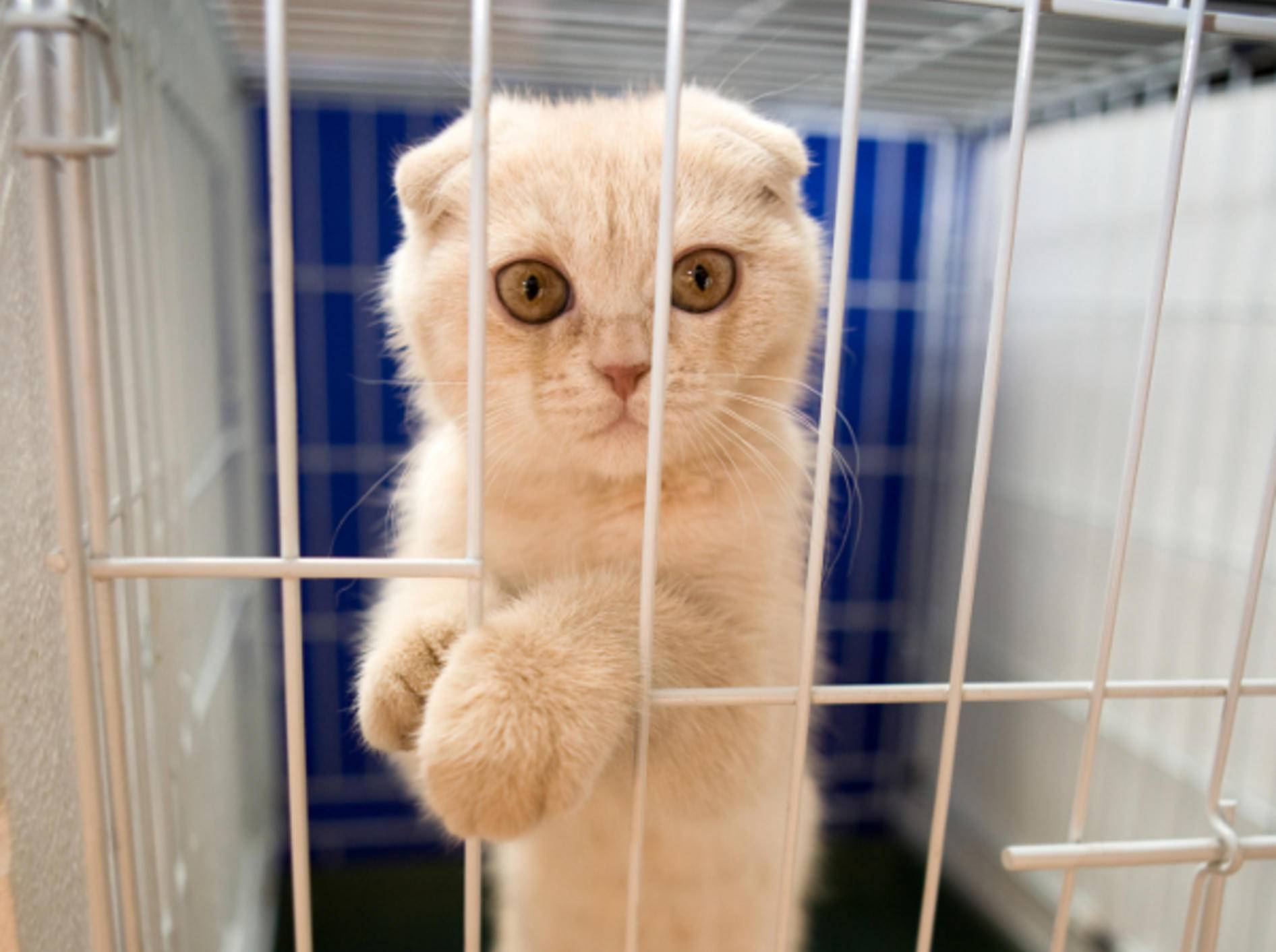 Arme Katze: Als Fluchthelfer missbraucht und geschnappt