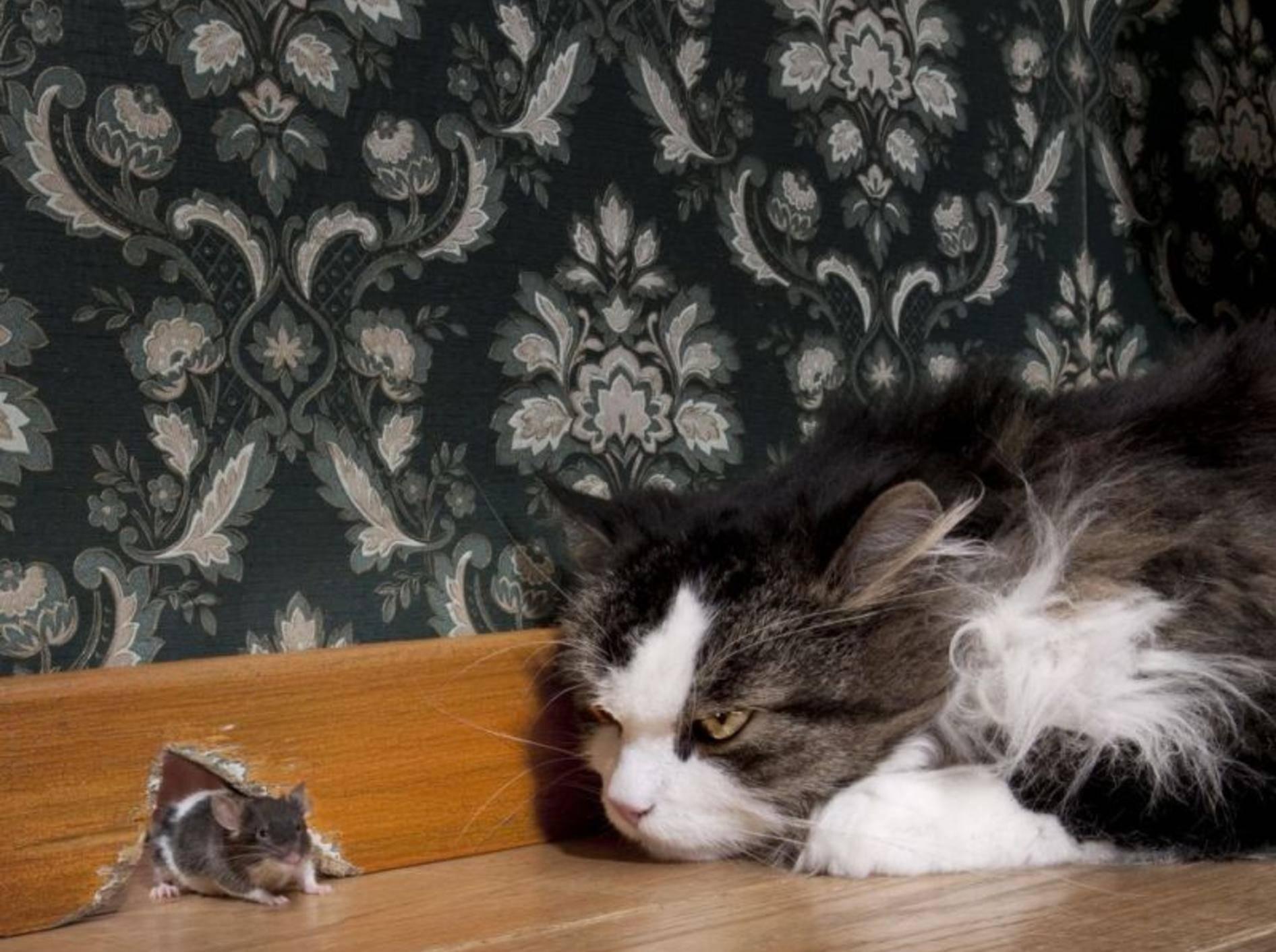 Katze-Maus-Tapete-Wohnung