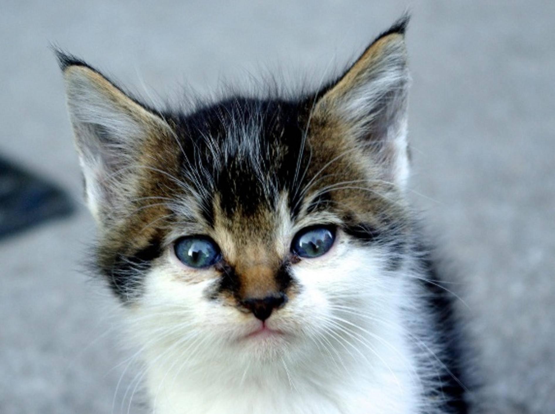 Steigert dieser süße Katzenblick Ihre Konzentration?