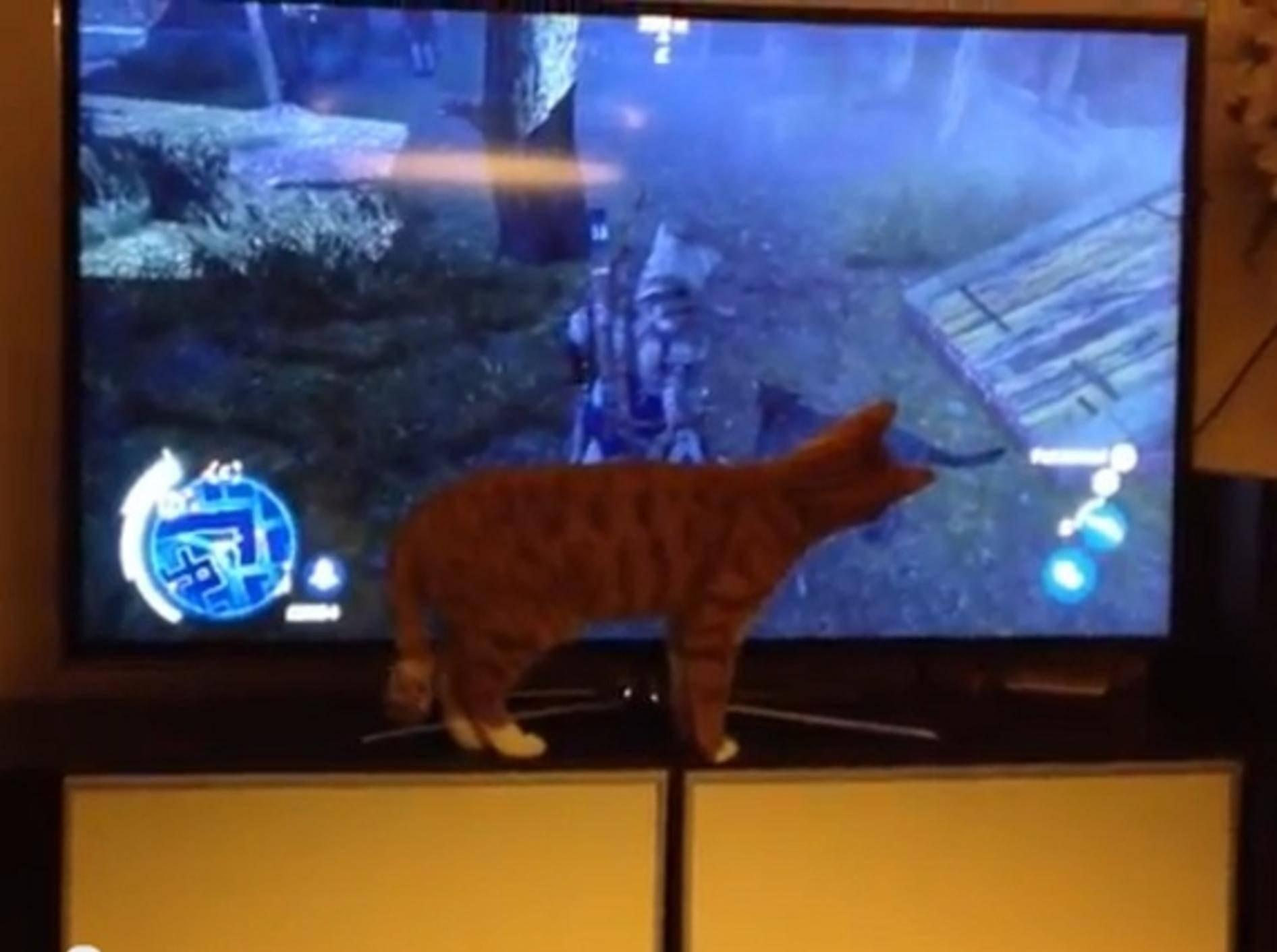 Katze hält Hund aus Videospiel für echt: Ja, wo ist er denn?