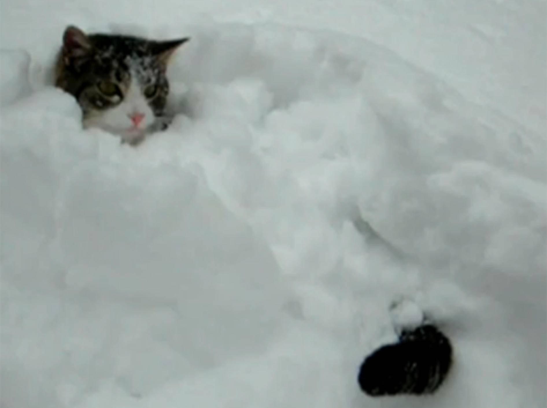 Katze hat sich im Schnee versteckt: Toben, jagen und staunen macht einfach Spaß