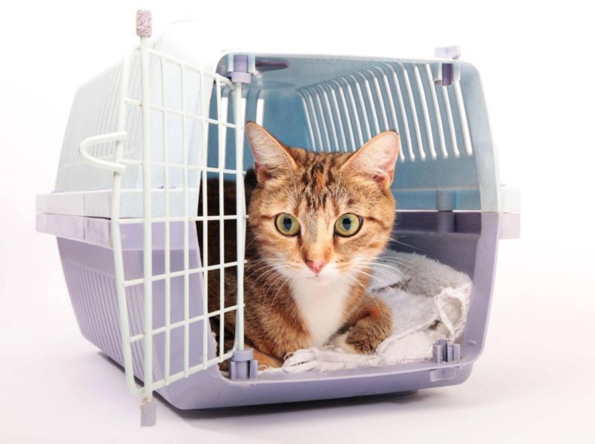 Katze in der Transportbox