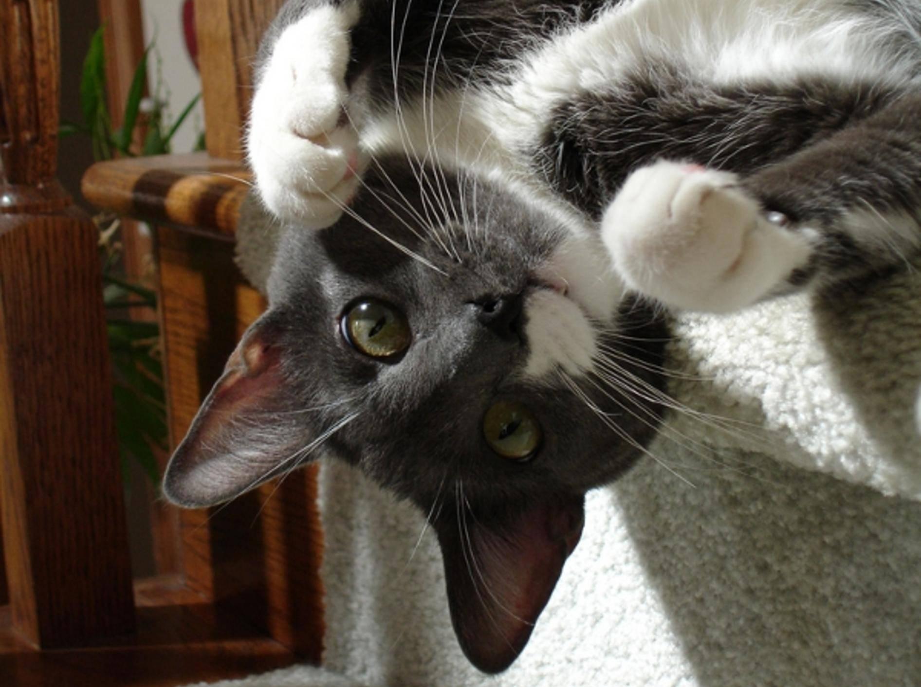 Manche Katzen lieben es, auf Treppen zu toben