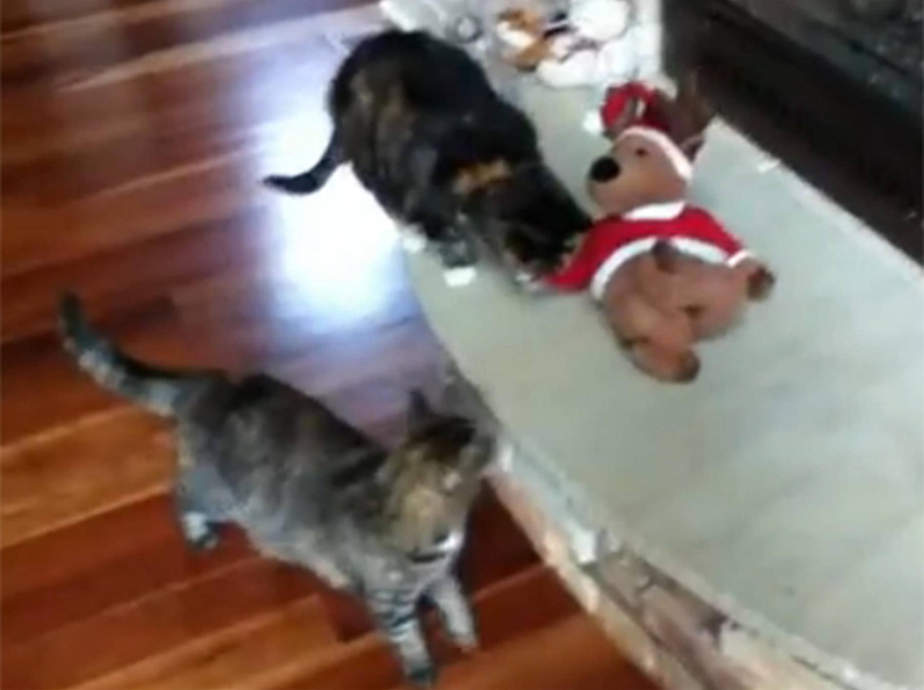 No Christmas, be happy: Katze beendet Weihnachten