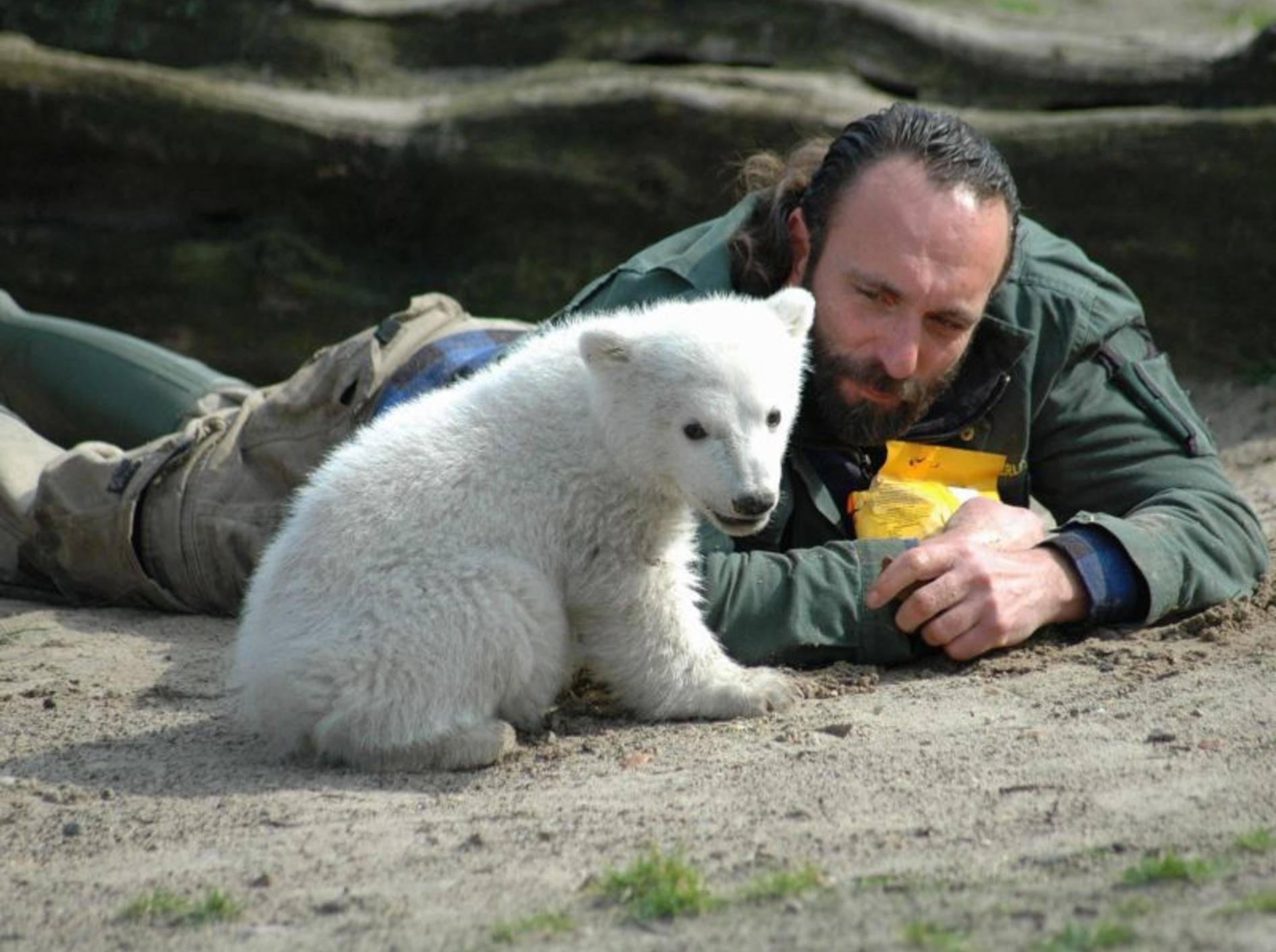 Eisbär Knut mit Pfleger