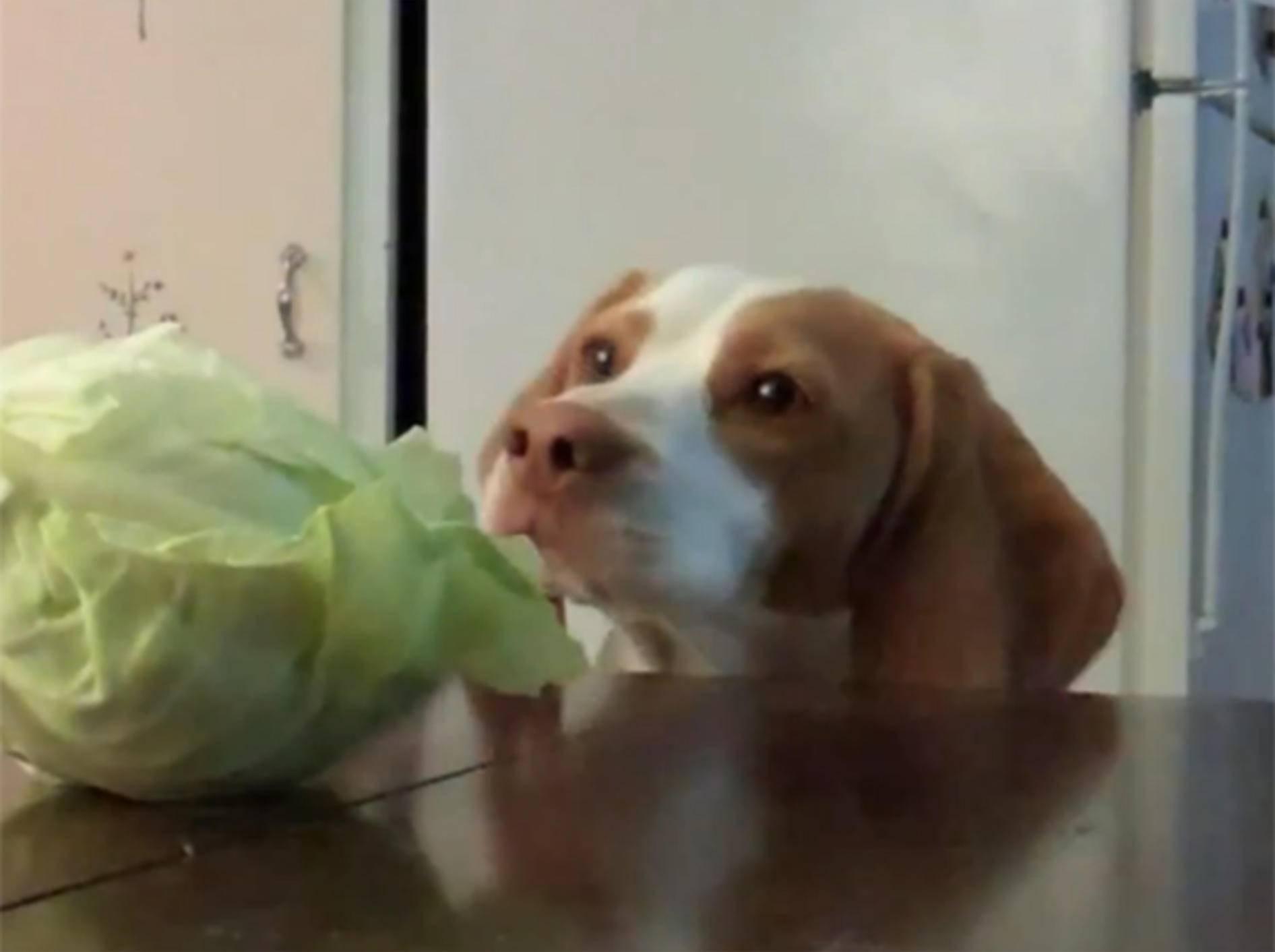 Maymo zum besten Hund 2012 gewählt