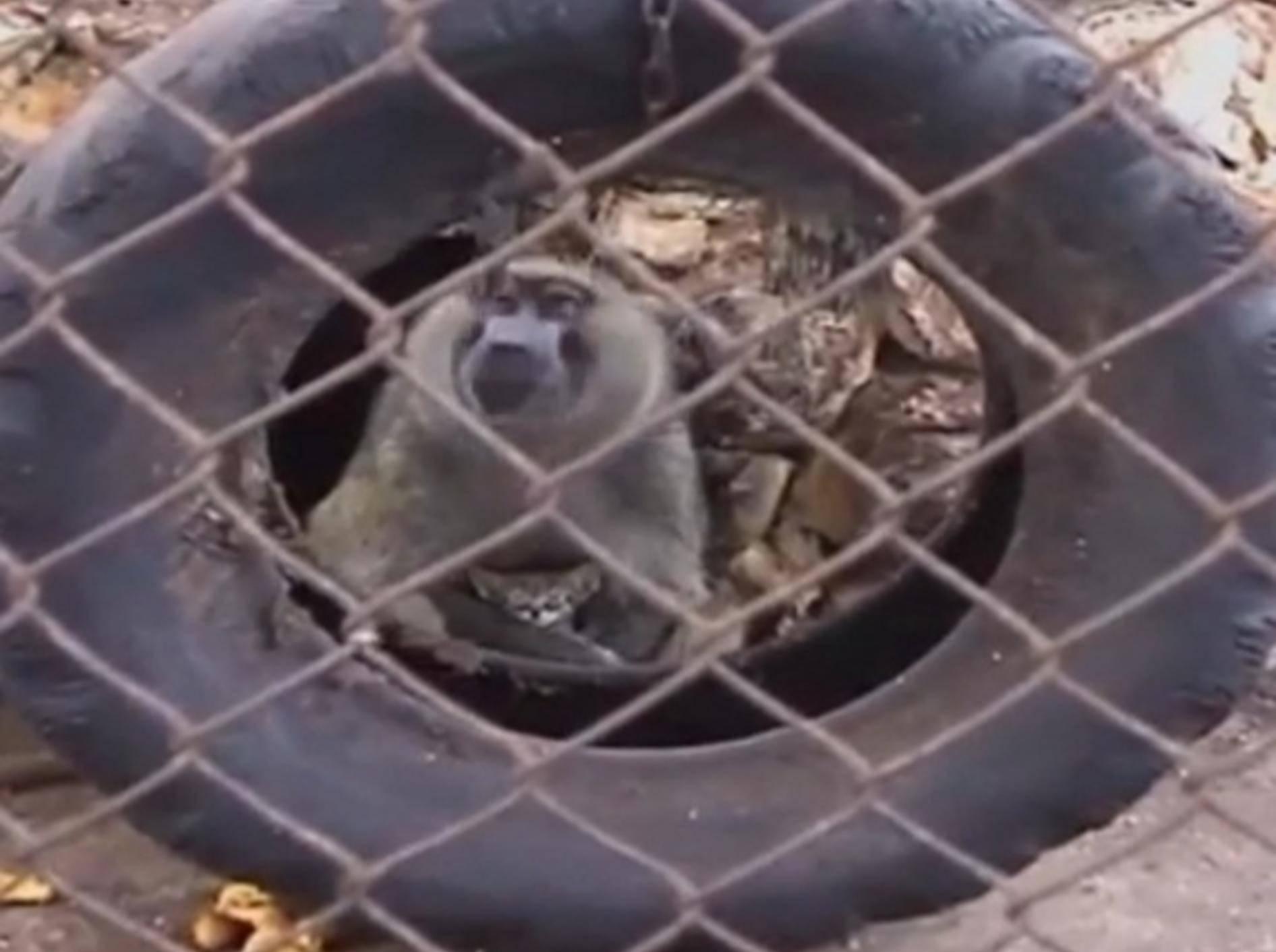 Pavian adoptiert Katze. Nun leben sie gemeinsam im Zoo