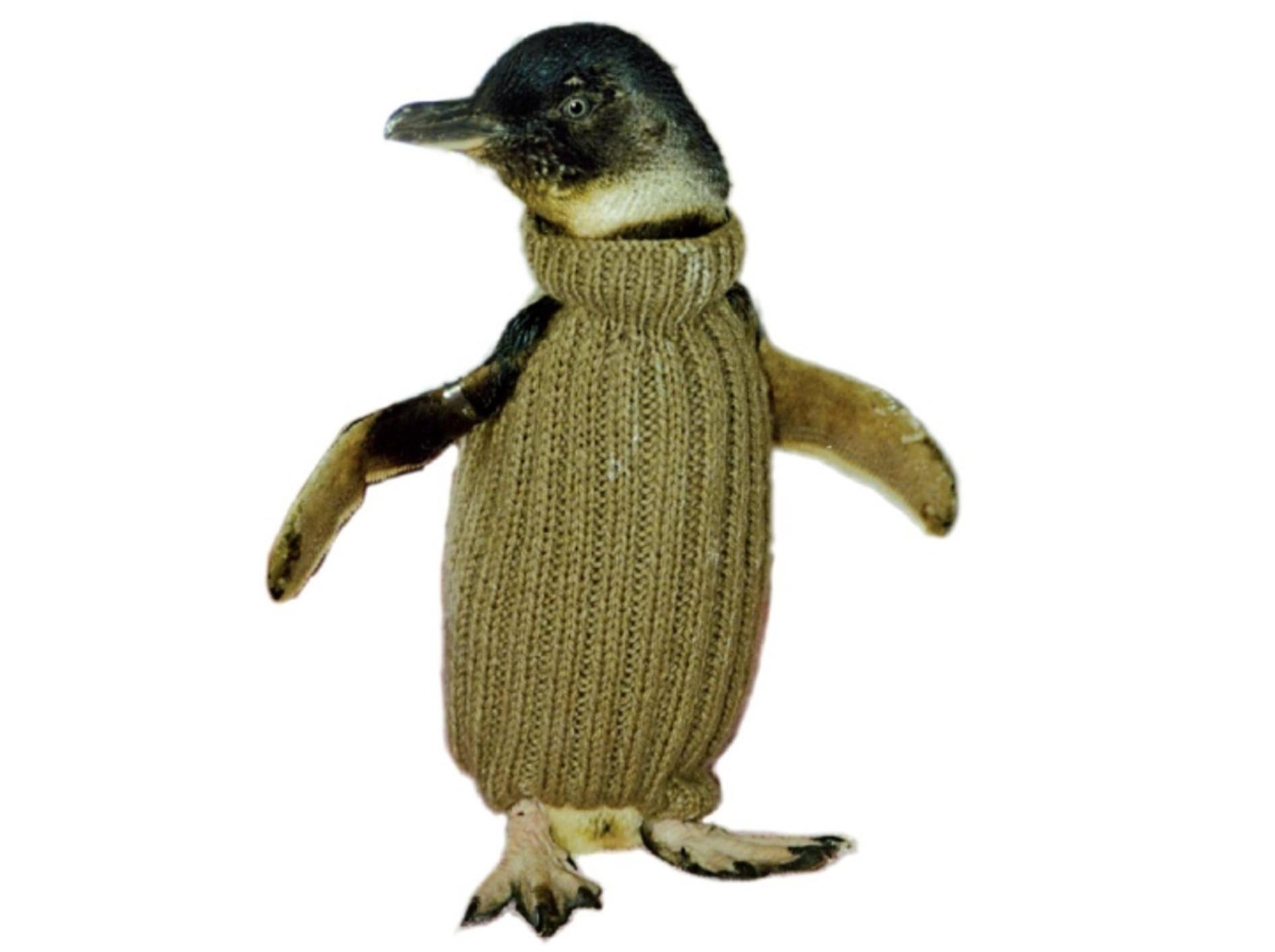 Modische Lebensretter 40.000 Pinguin-Pullis für Australien