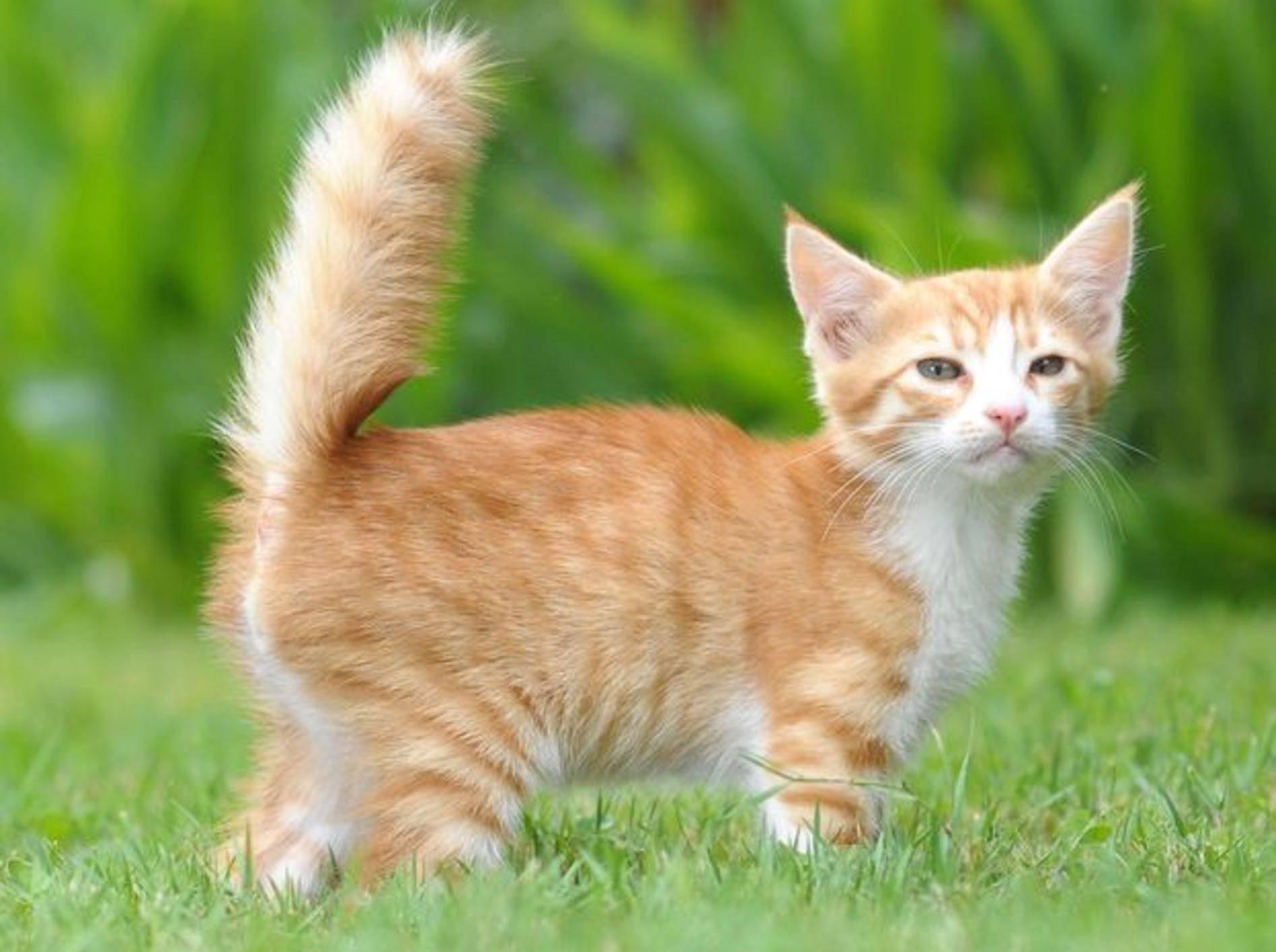 Junge rote Katze auf der Wiese