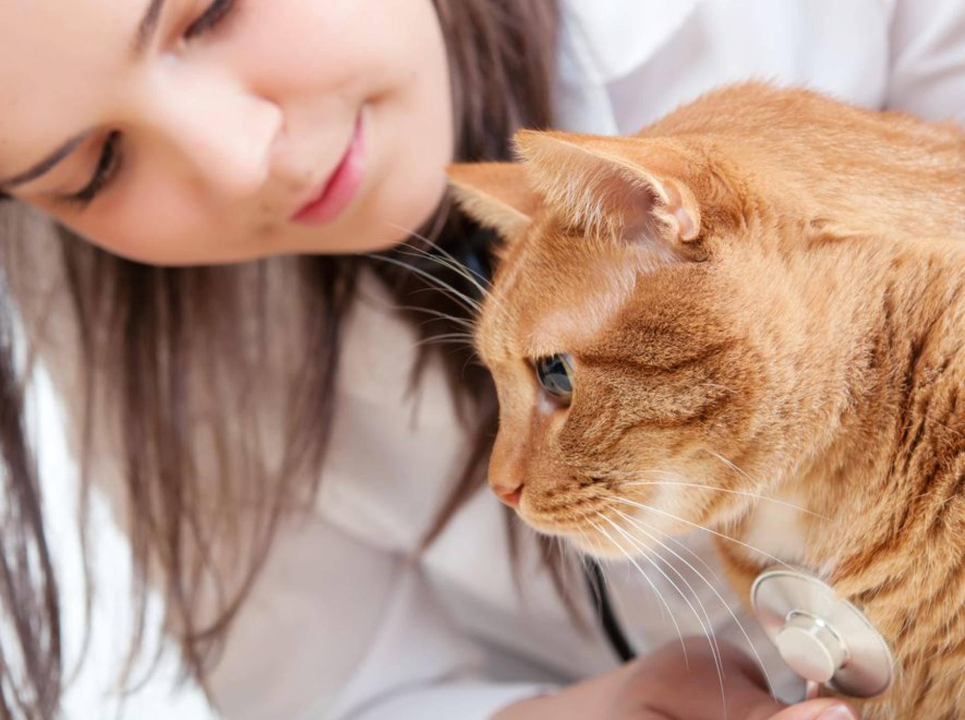 Ein guter Tierarzt verhält sich einfühlsam und geduldig bei der Untersuchung Ihrer Katze – Bild: Shutterstock / mtr