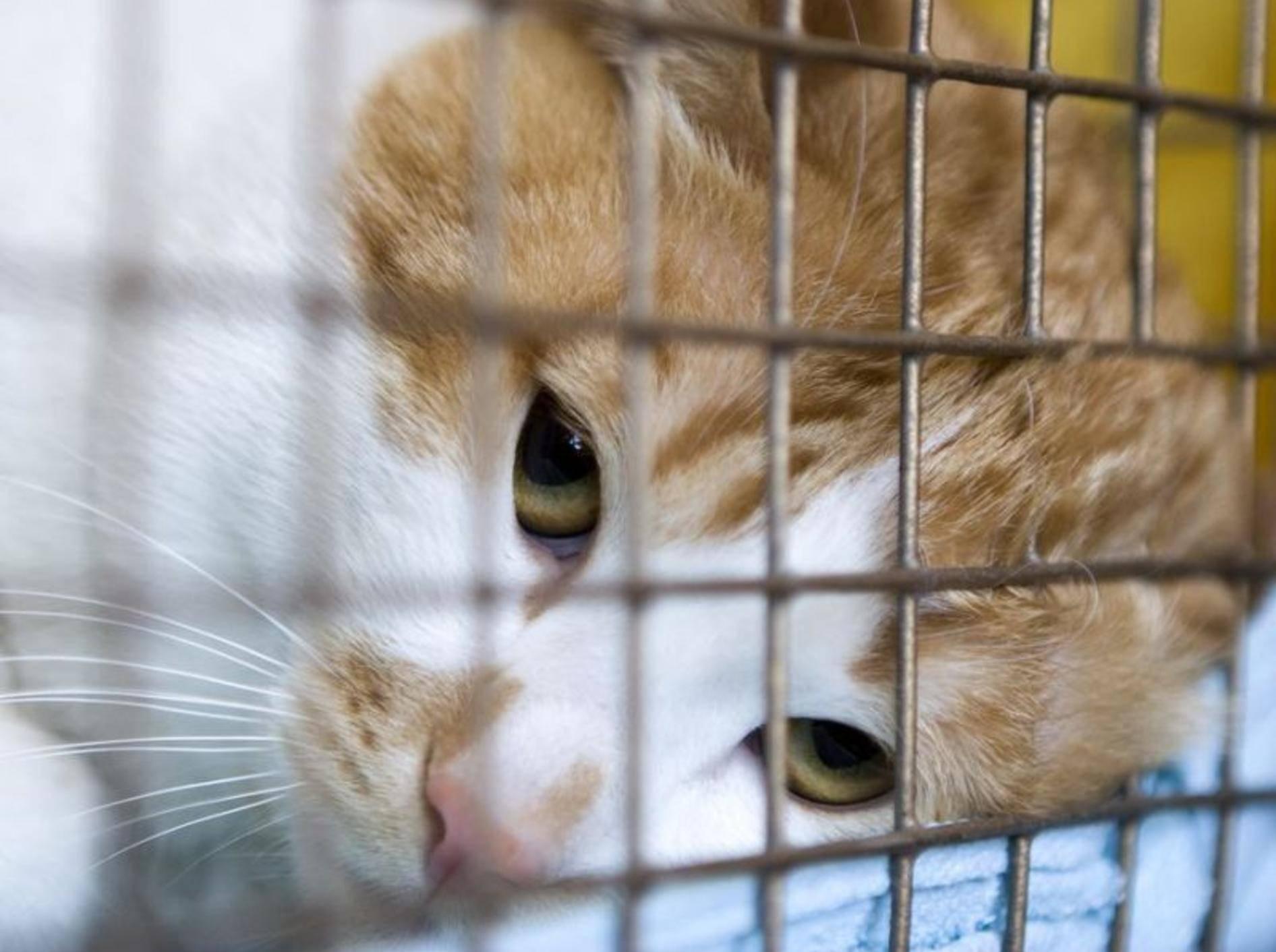 Rote Katze vor Gitterstäben
