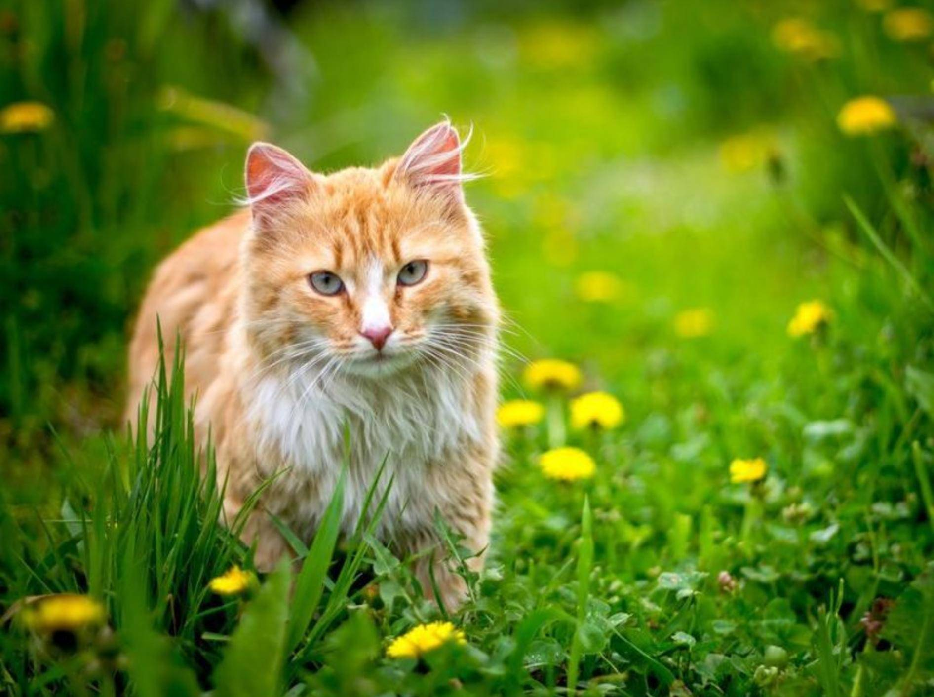 Eine Katze vom Bauernhof braucht für die Eingewöhnung vor allem Geduld – Shutterstock / JetKat
