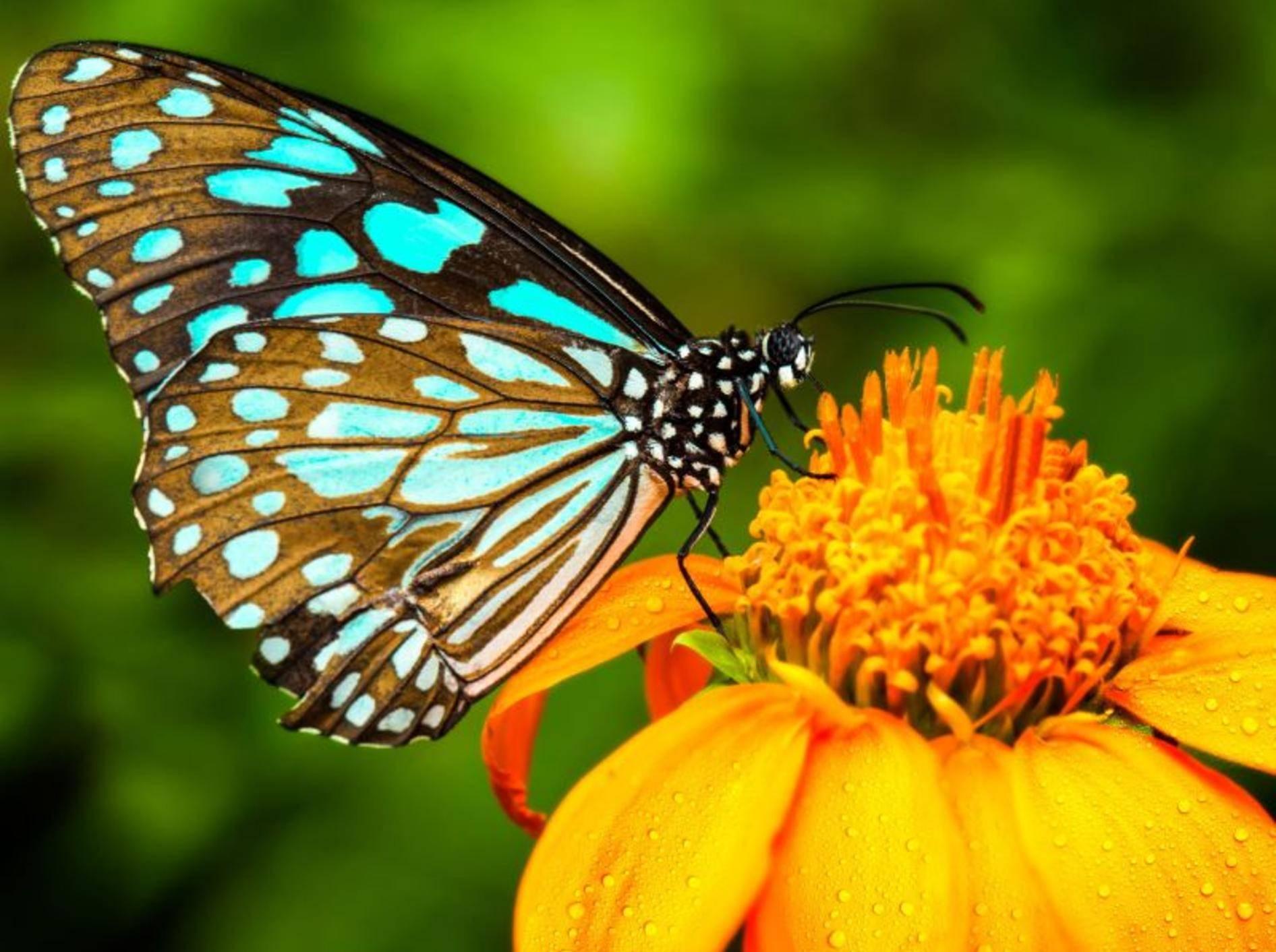 Schmetterling auf Blume