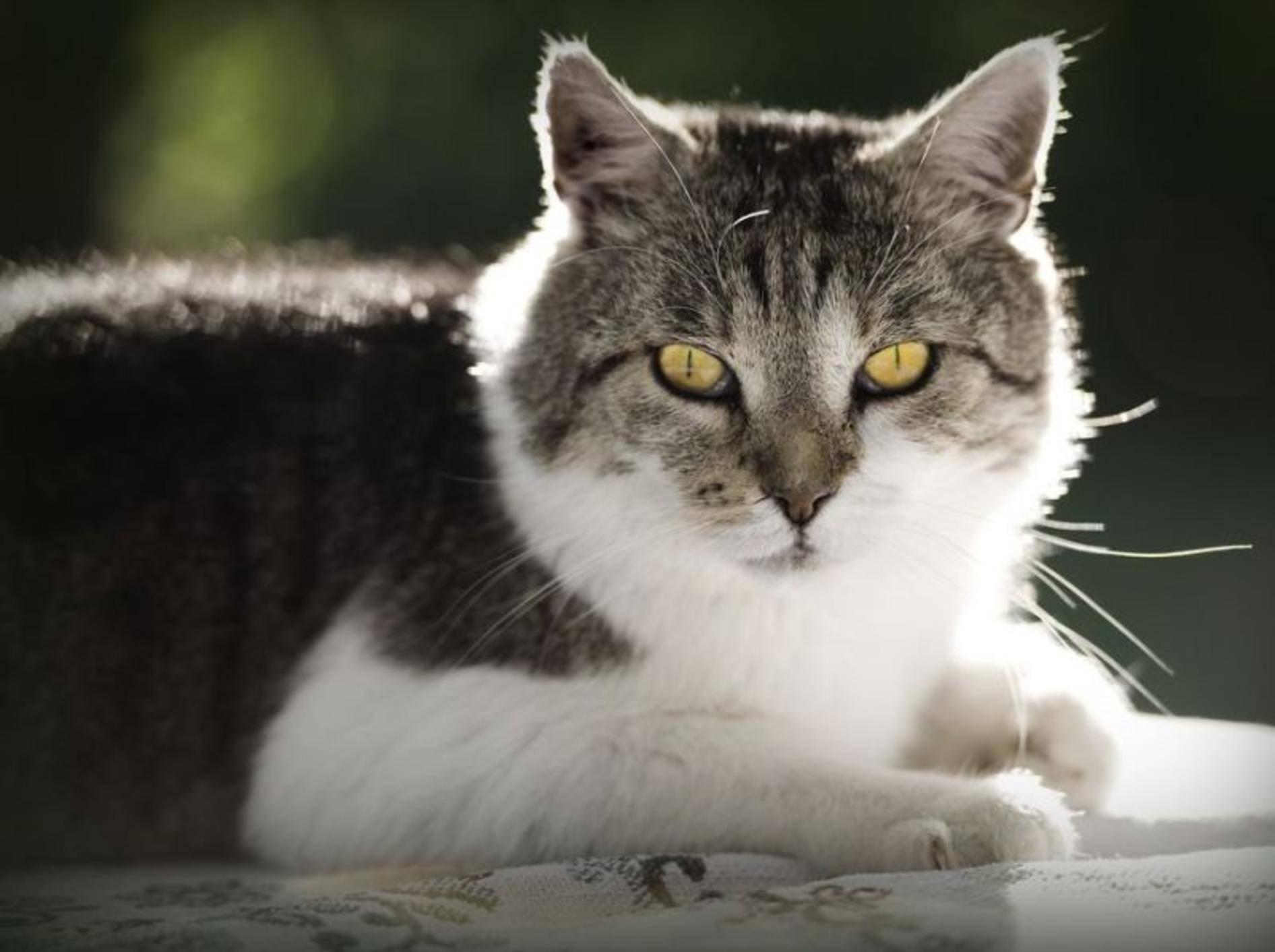 Katze auf der Fensterbank