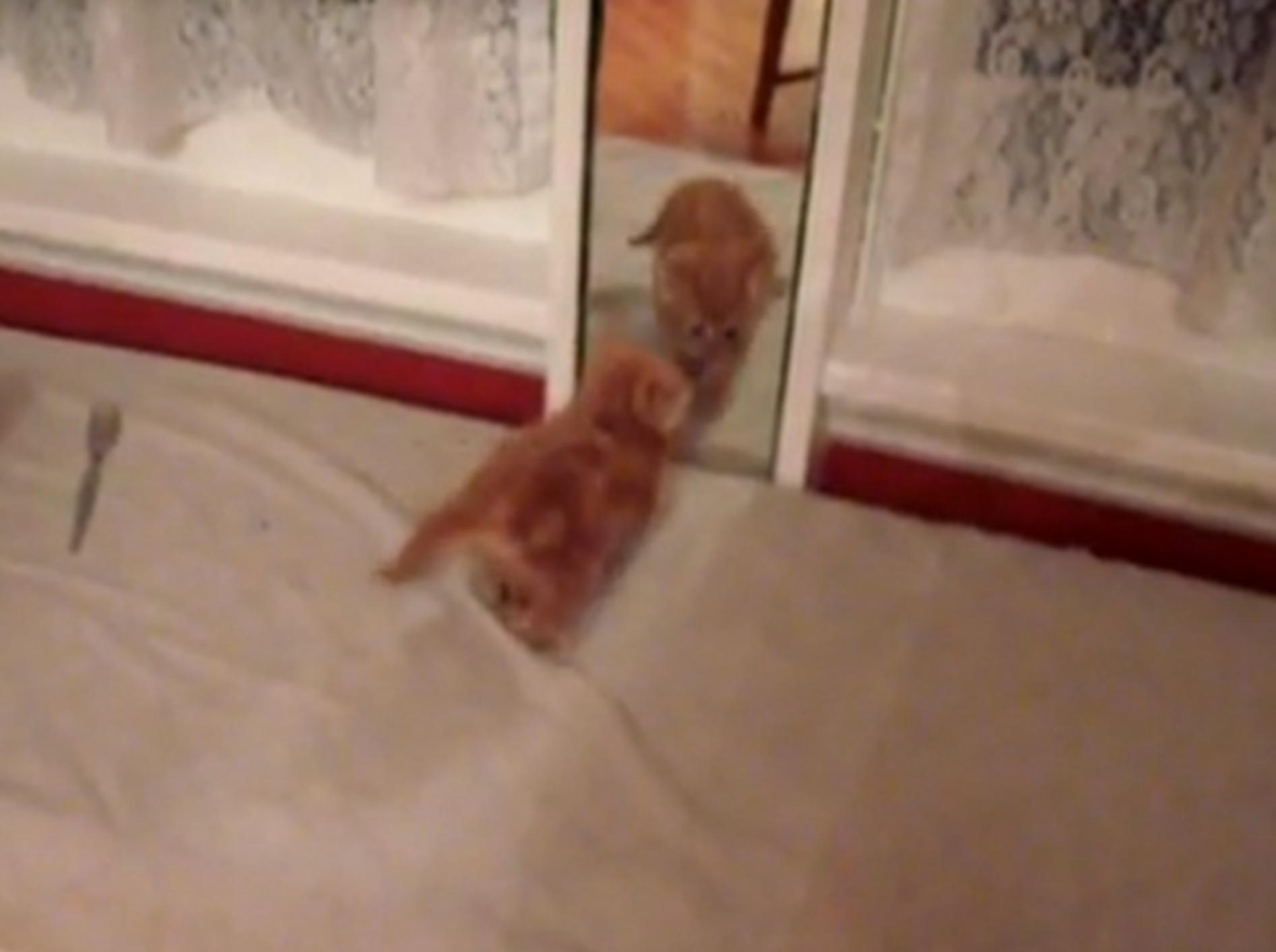 Oh Schreck: Süße Katzen vor dem Spiegel
