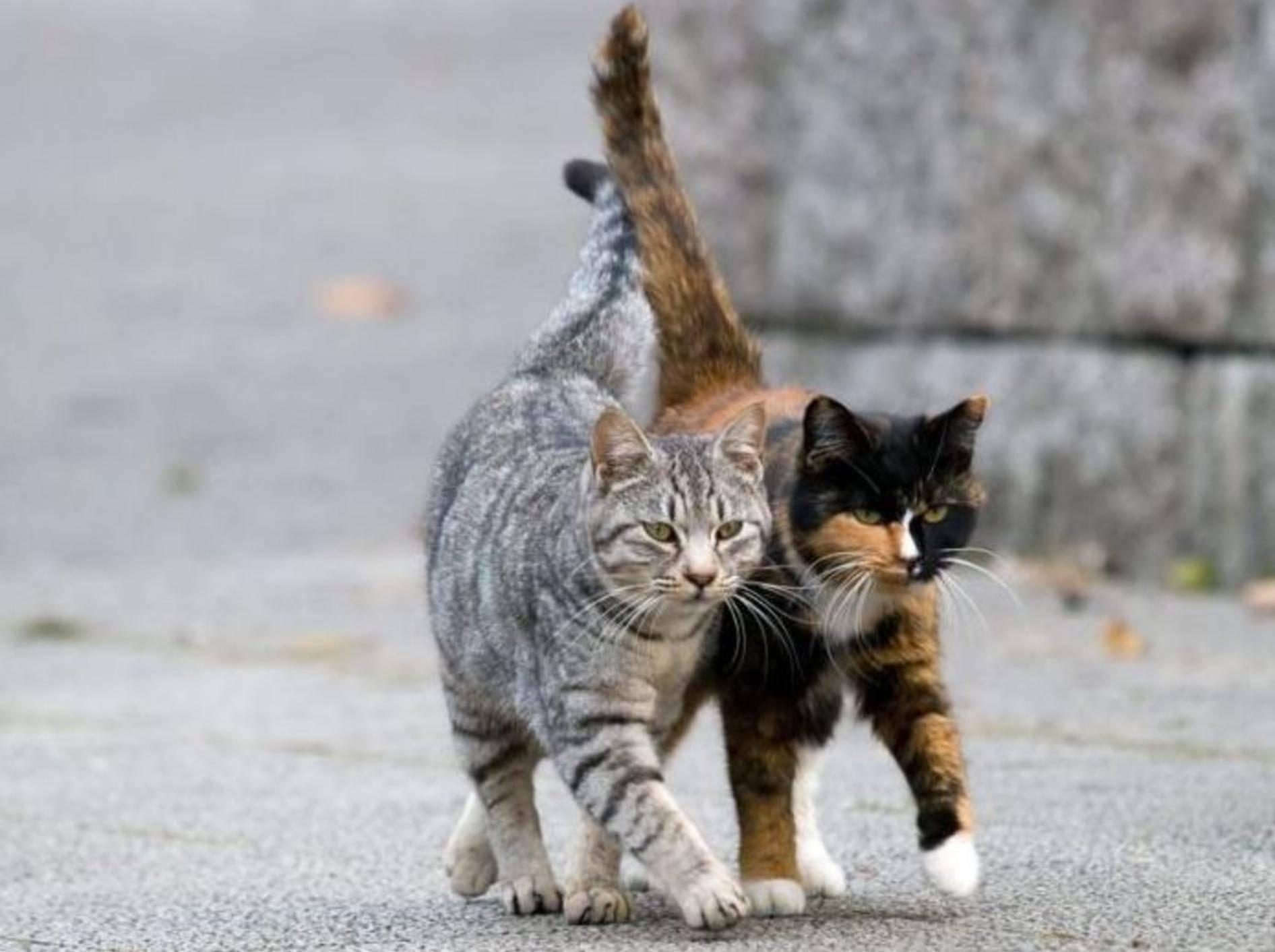 Zwei Katzen auf der Straße