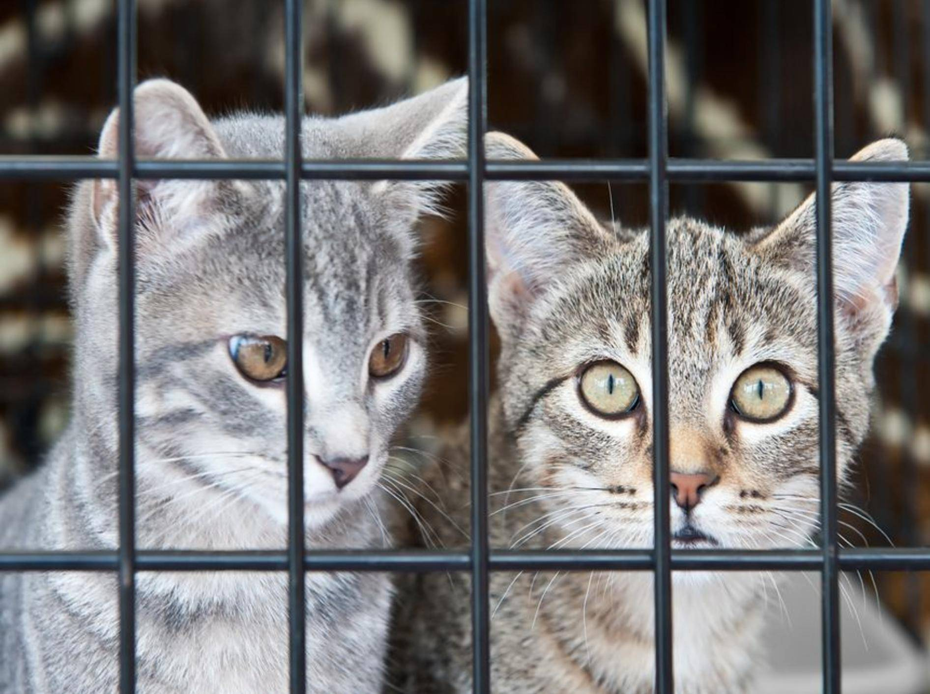 Graue Katzen hinter Gittern
