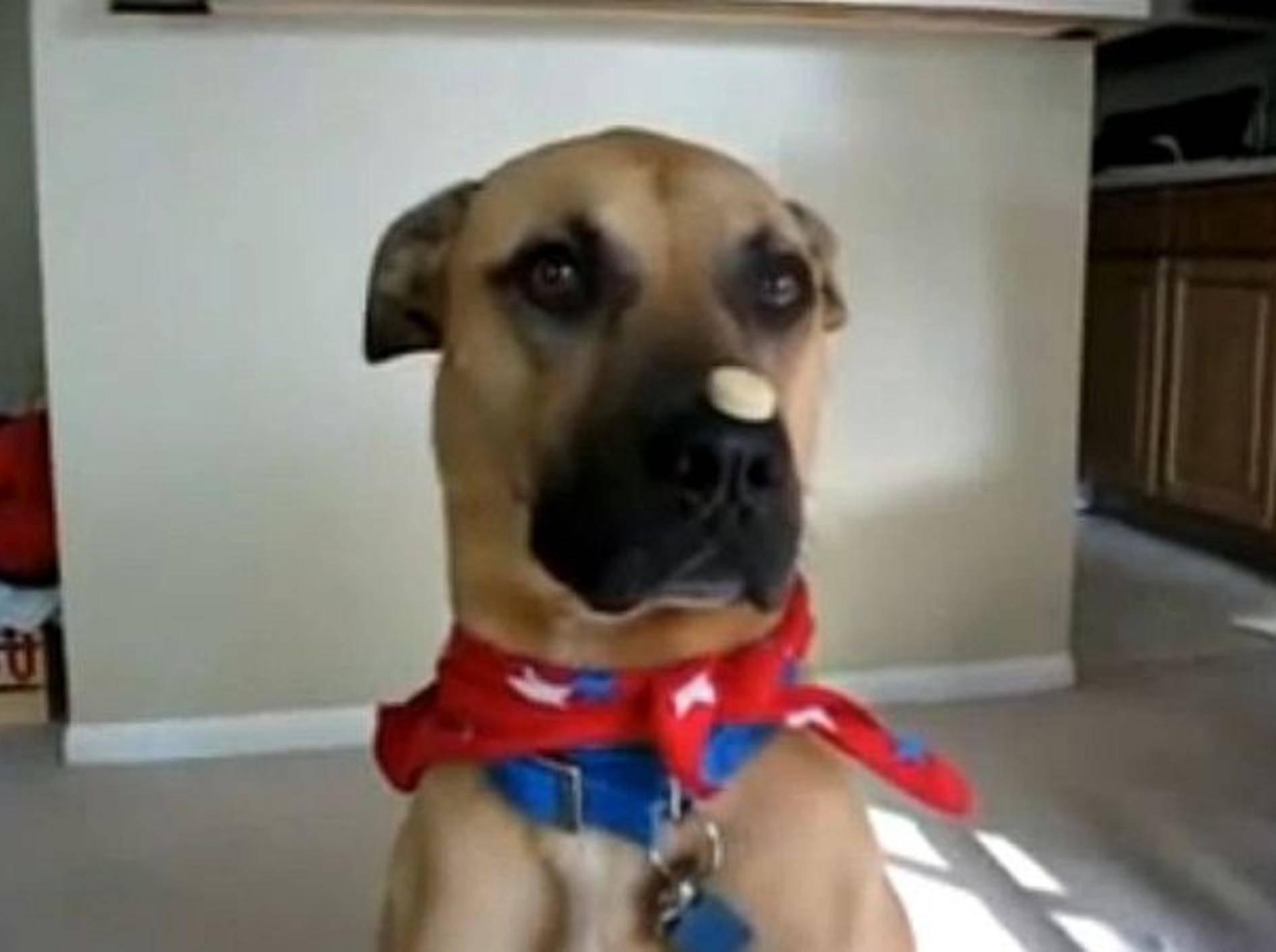 Hund zeigt Zaubertrick – Bild: Youtube / FashionWorld2013