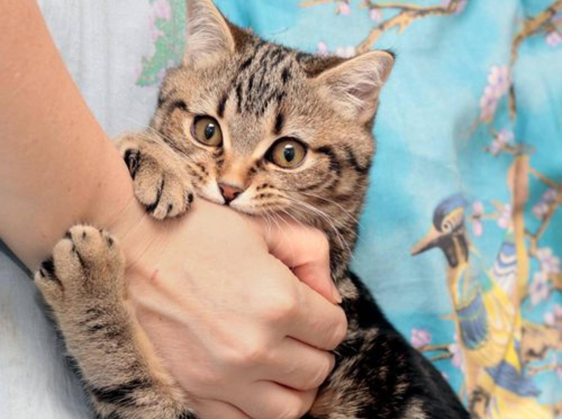 Katze beißt zu: Nicht immer böse gemeint