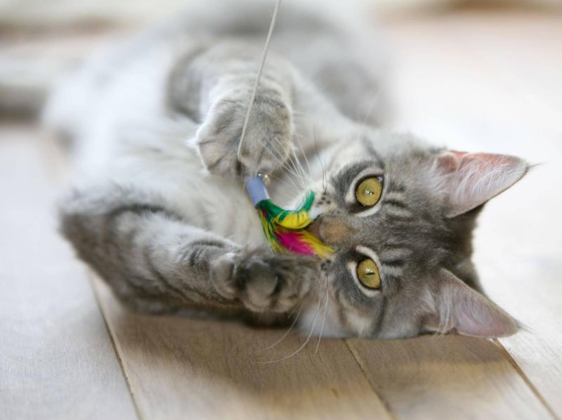 Katzenangel: Weckt den Jagdtrieb in der Katze