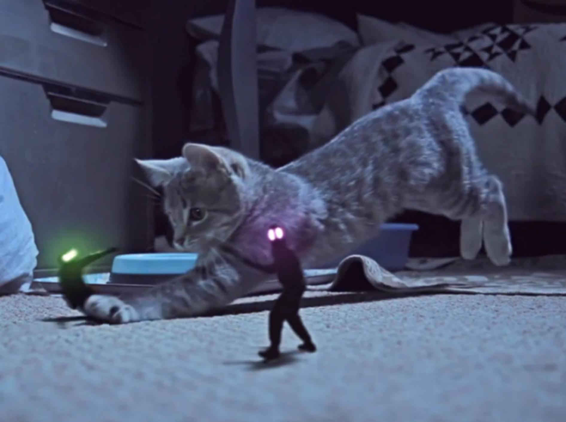"""Musikvideo """"Kitten on the beat"""": Katze ertappt Sockendieb"""