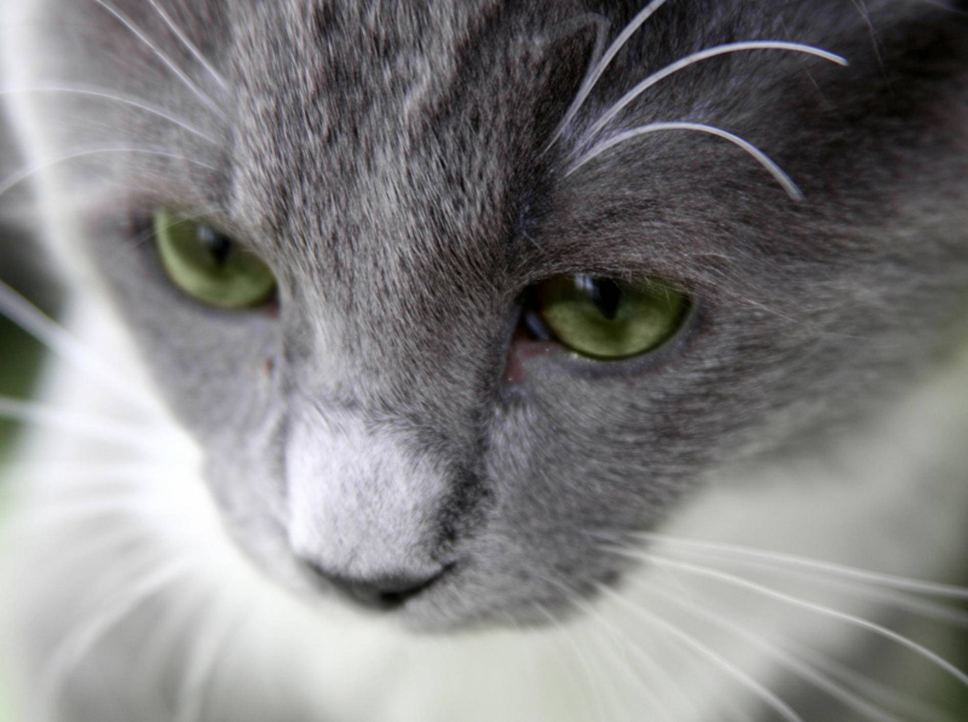 Ist es in der Schweiz wirklich noch erlaubt, Katzen zu essen? – Bild: Shutterstock / Galina Barskaya