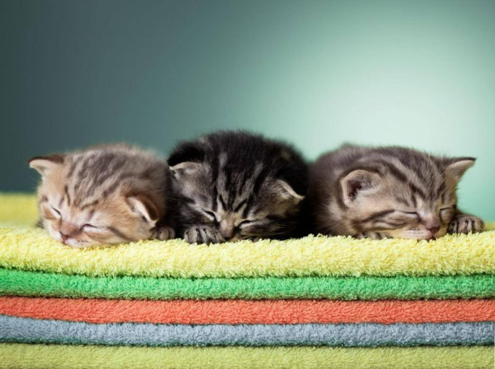 Katzenbabys mögen´s flauschig: Ihr Schlafplatz ist der Handtuchberg