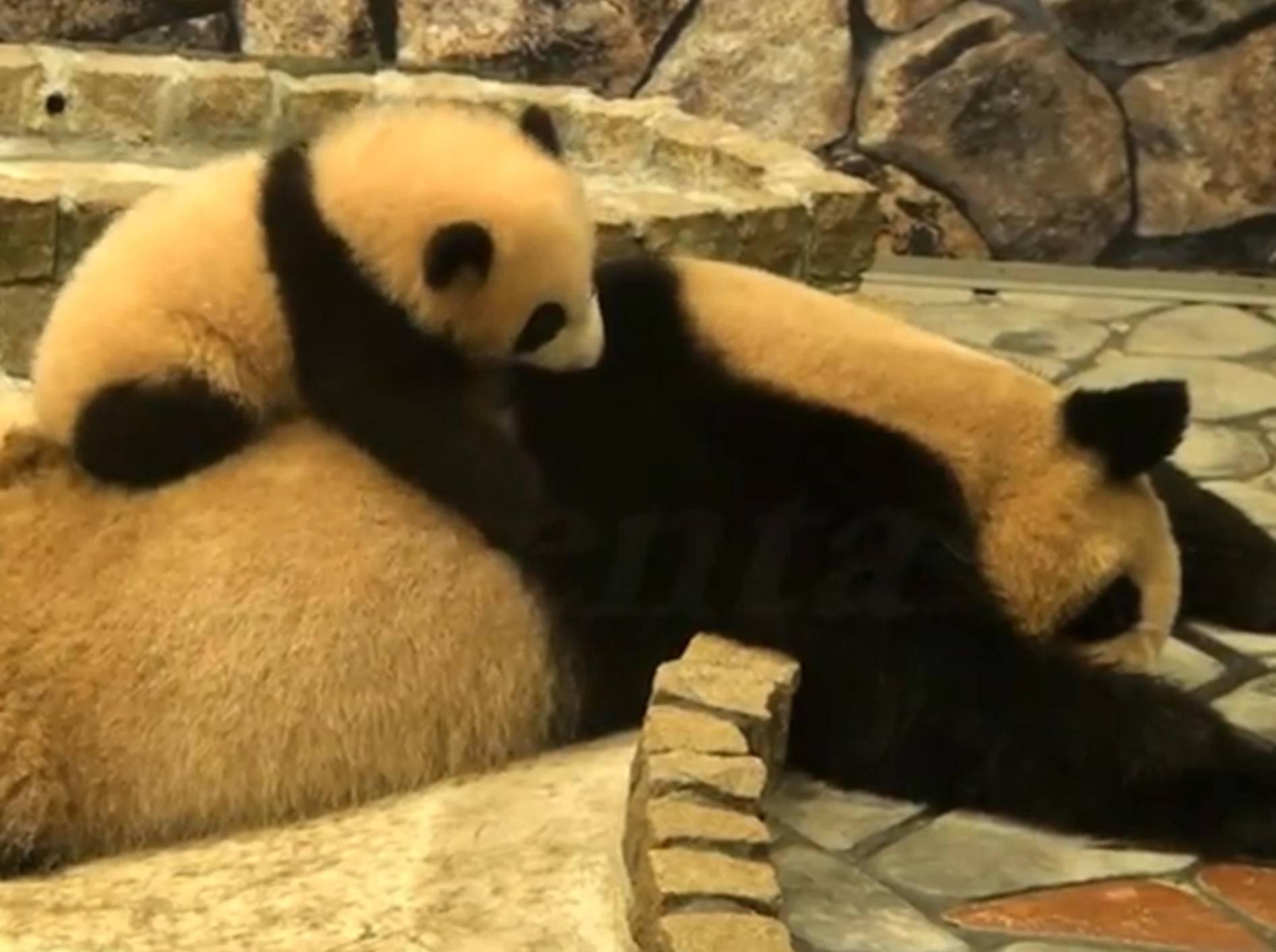 Pandababy-Mutter-aufwecken-rumturnen