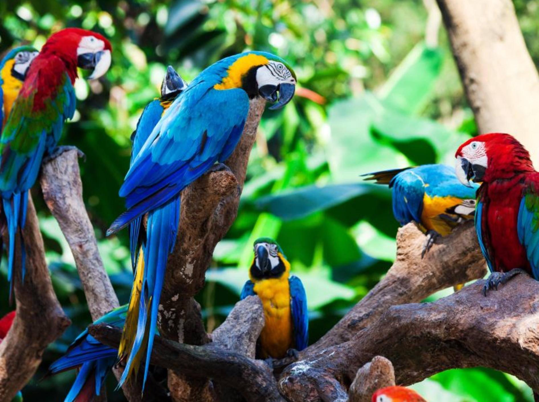 Papageien haben die Fähigkeit, Laute nachzuahmen