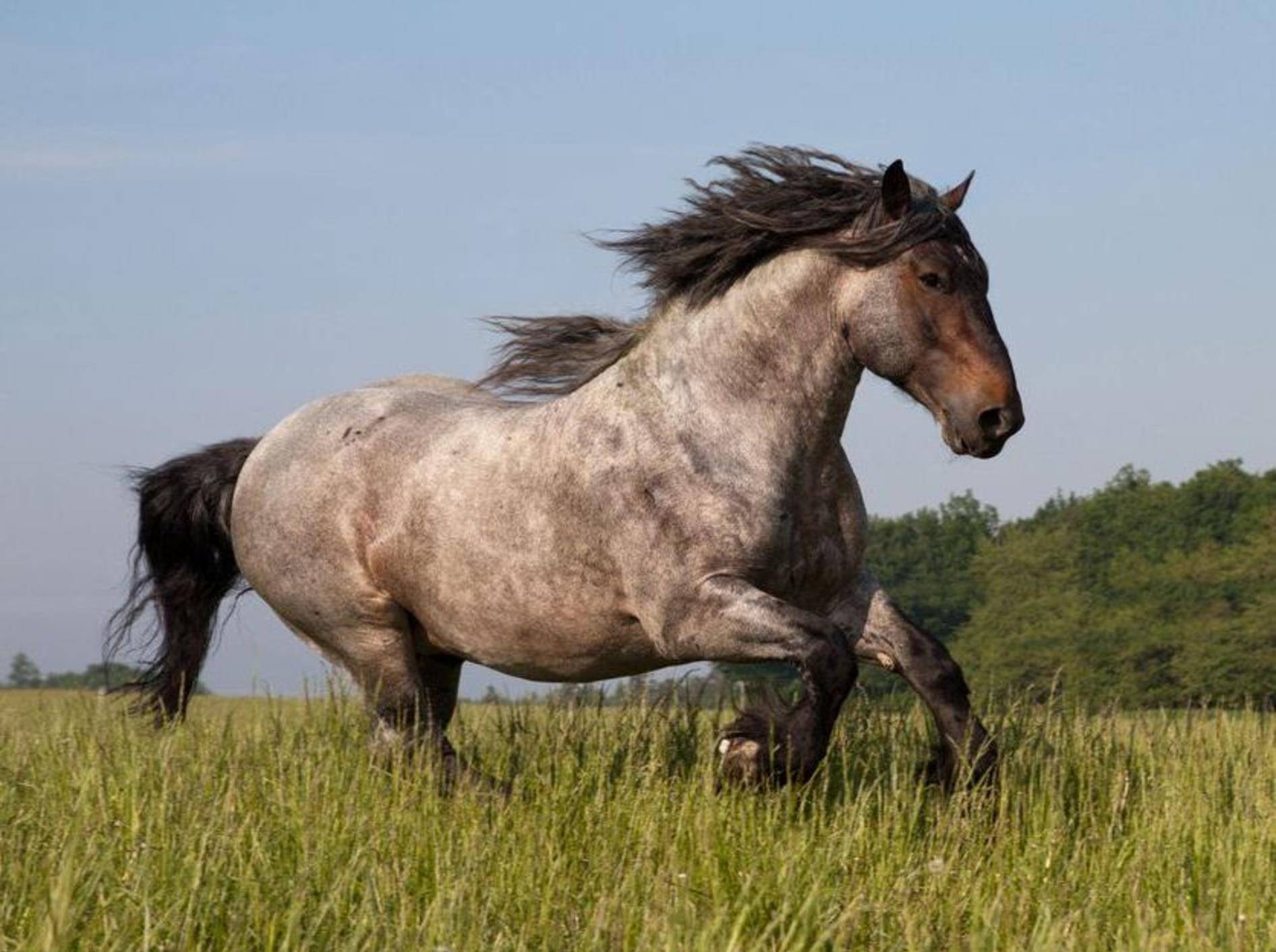 Pferd-Gross-Rennend-Wiese
