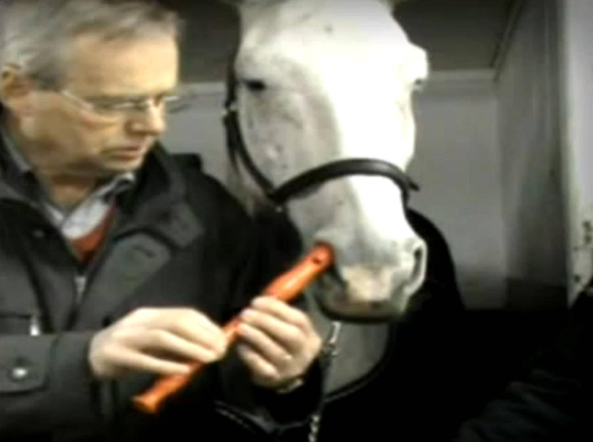 Pferd spiel Blockflöte mit der Nase