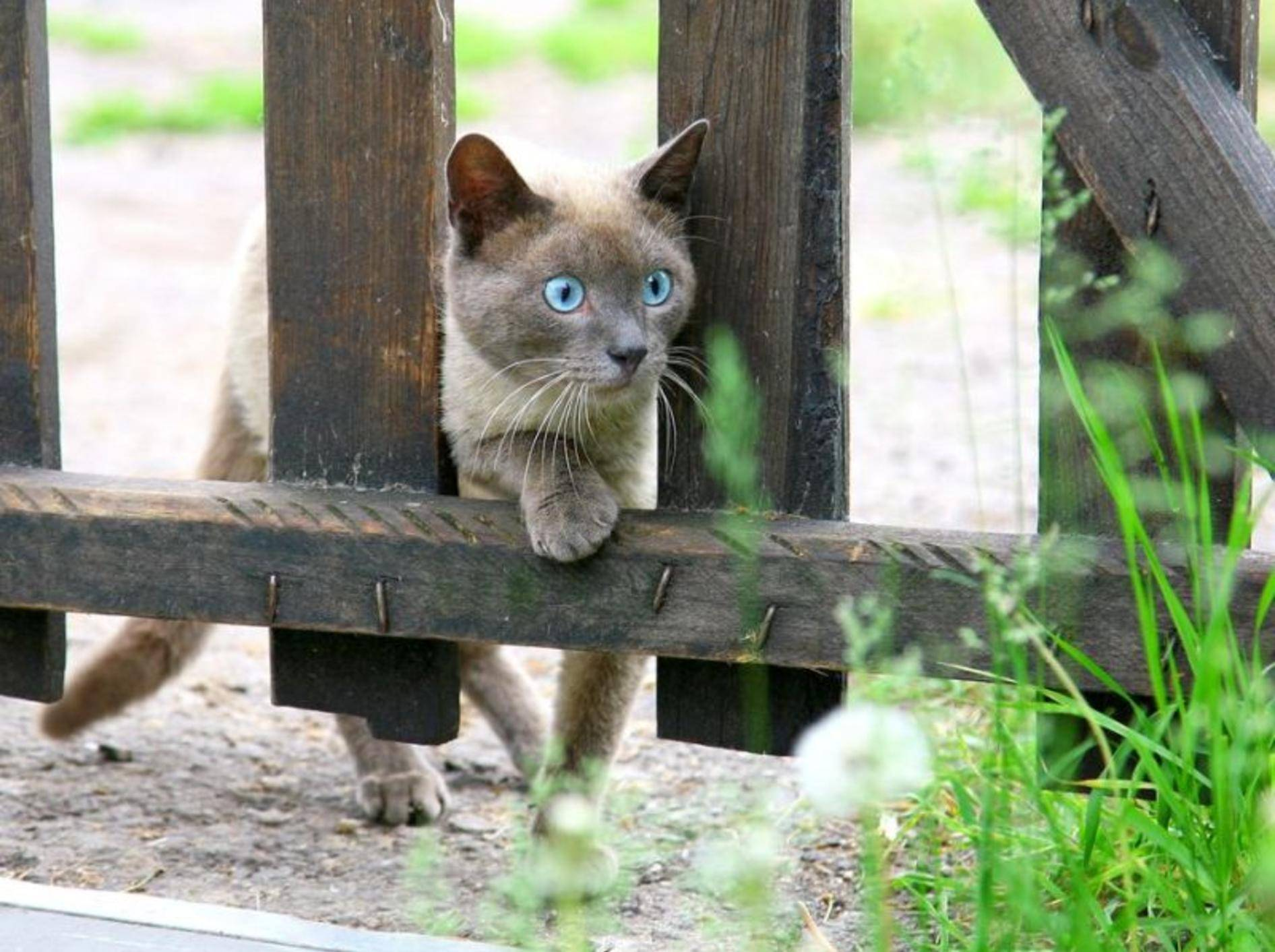 """Platz 5: """"Findus"""" hat es unter die beliebtesten Katzennamen geschafft – Bild: Shutterstock / LeniKovaleva"""