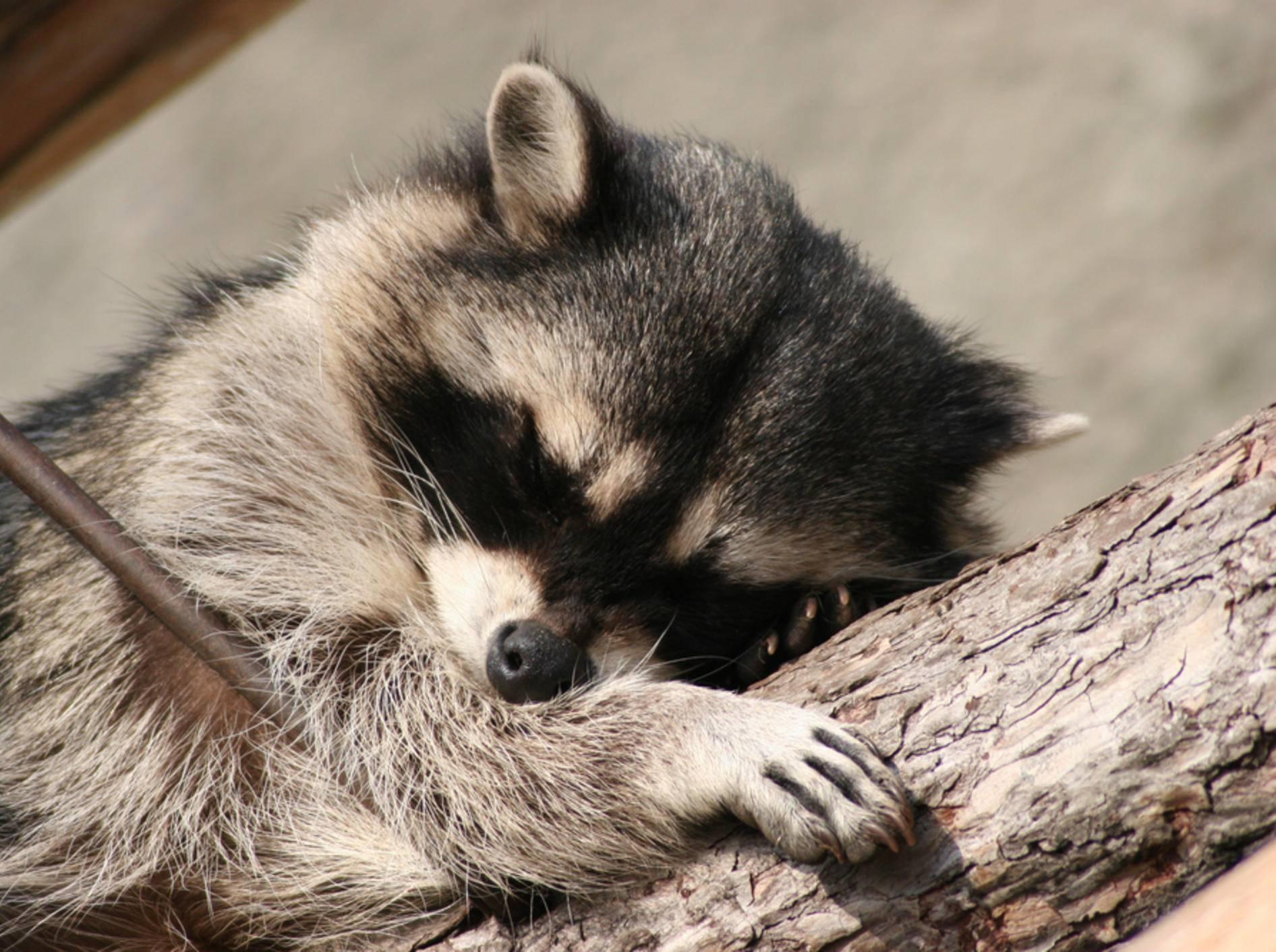 Haben Tiere die Fähigkeit zum Träumen?