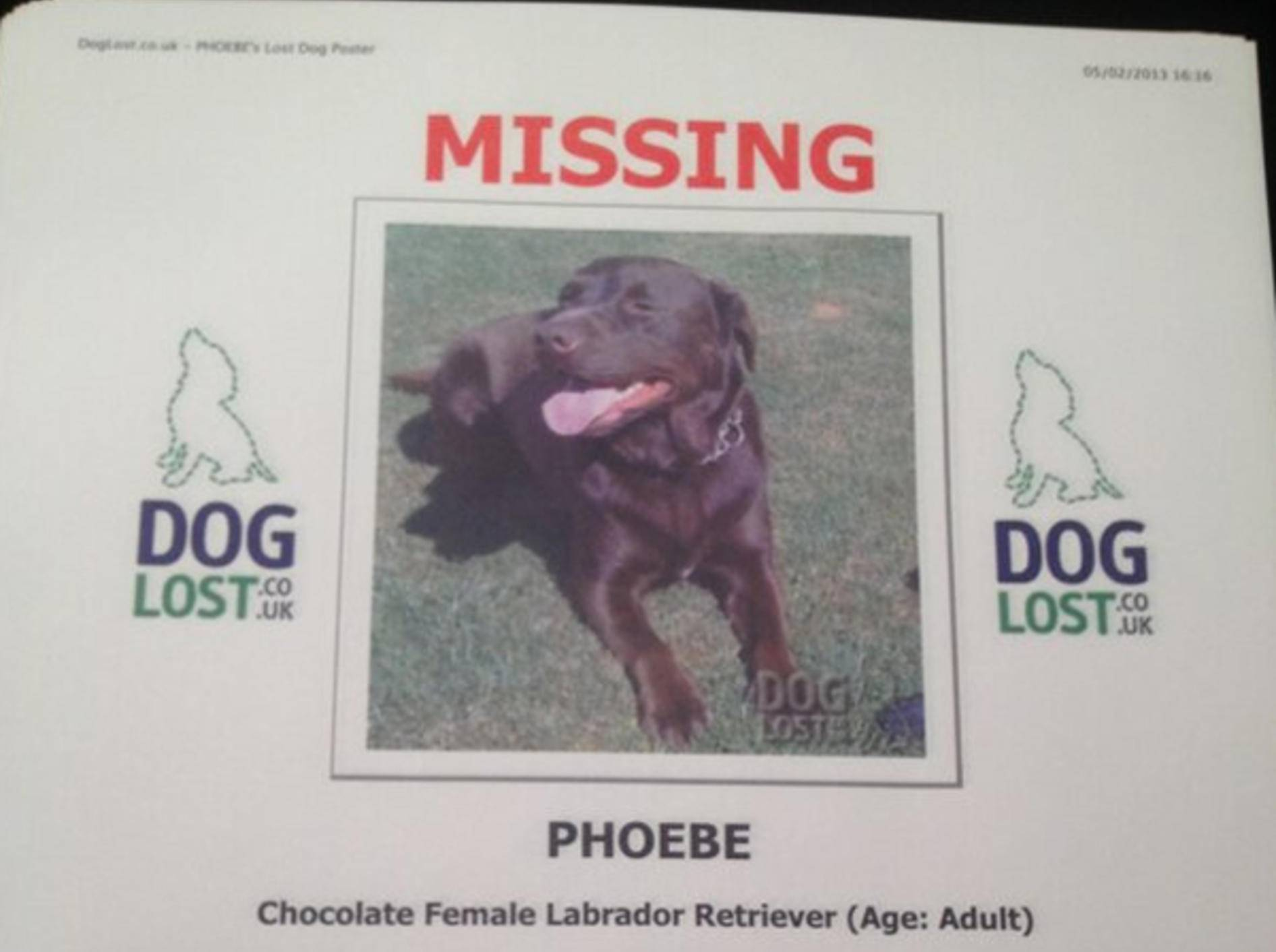 labrador-retriever-missing-emma-bunton