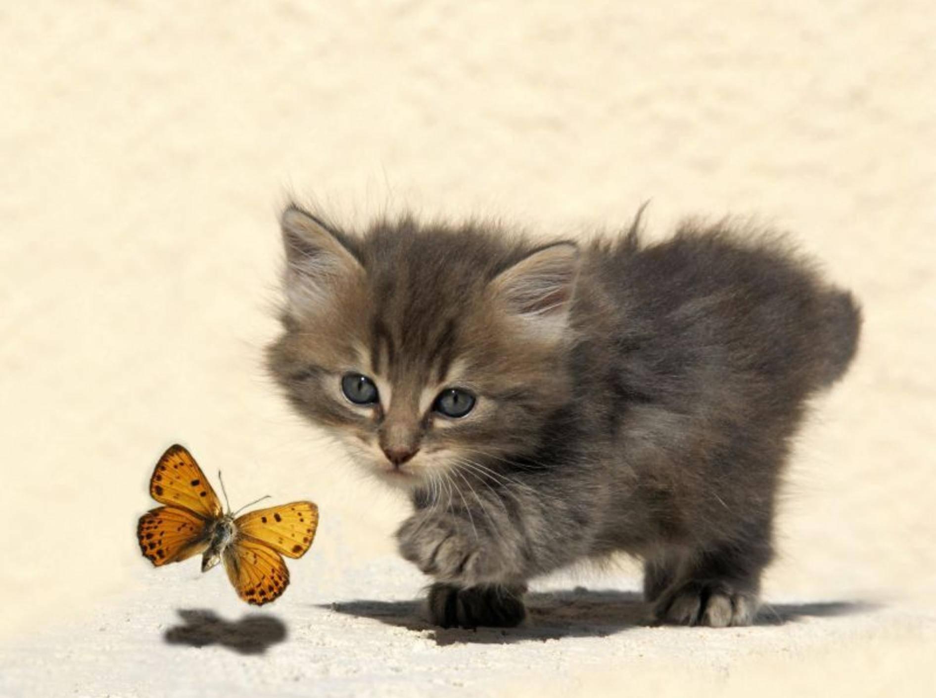 Katzenbaby und Schmetterling: Begegnung im Sonnenschein — Bild: Shutterstock / cynoclub