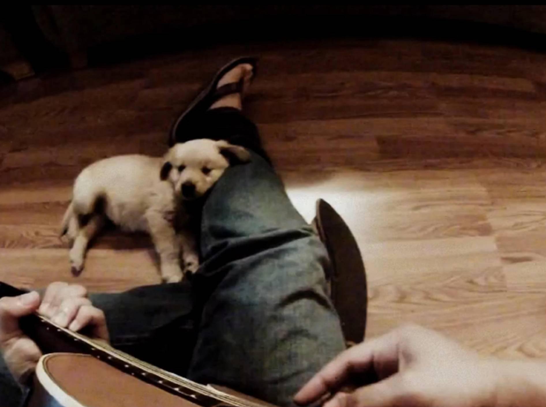 Süßer Golden-Retriever-Welpe lauscht Herrchens Gitarrenklängen