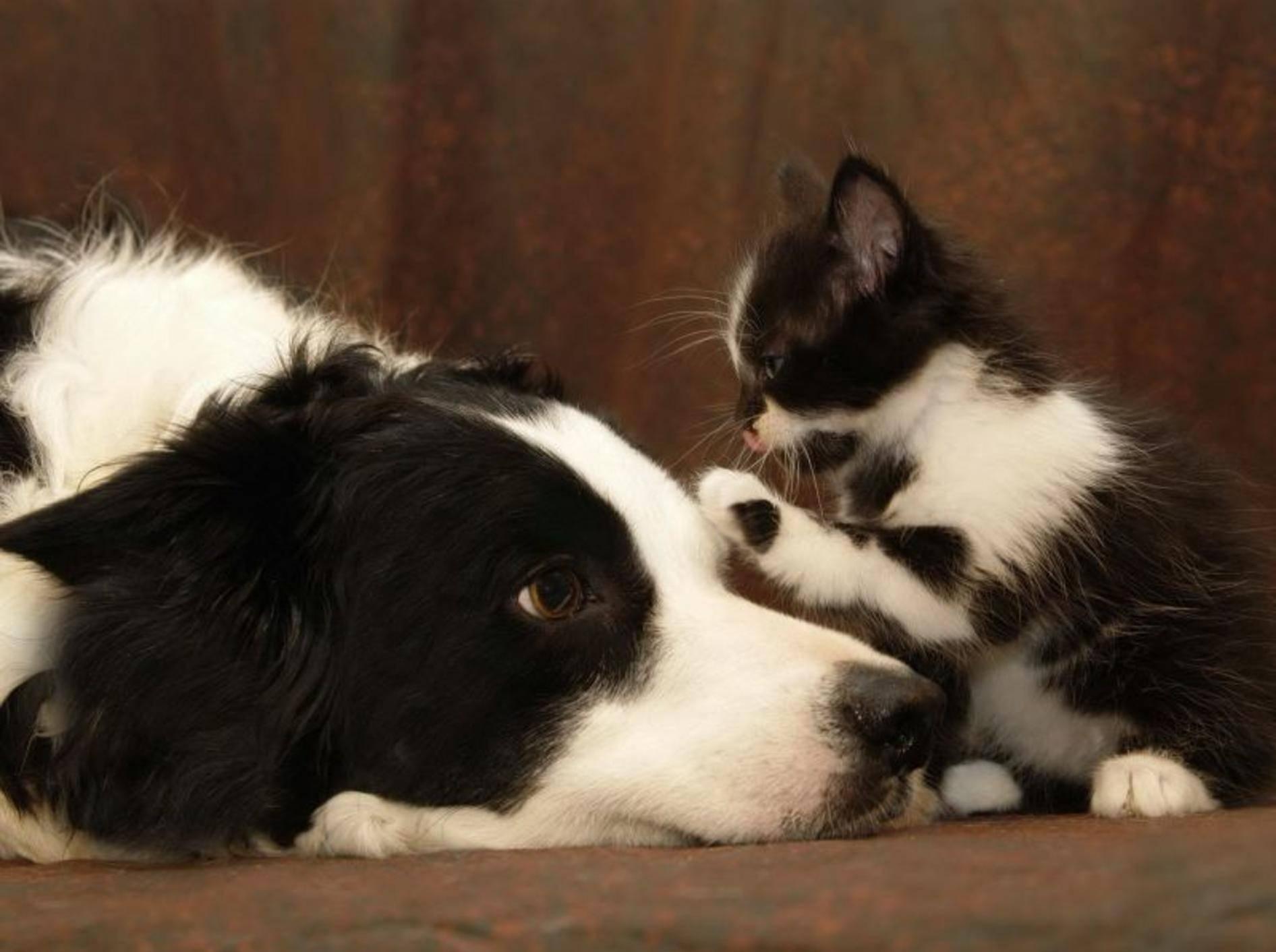 Freundschaft zwischen Katze und Hund / Bild: Shutterstock / Dale A Stork
