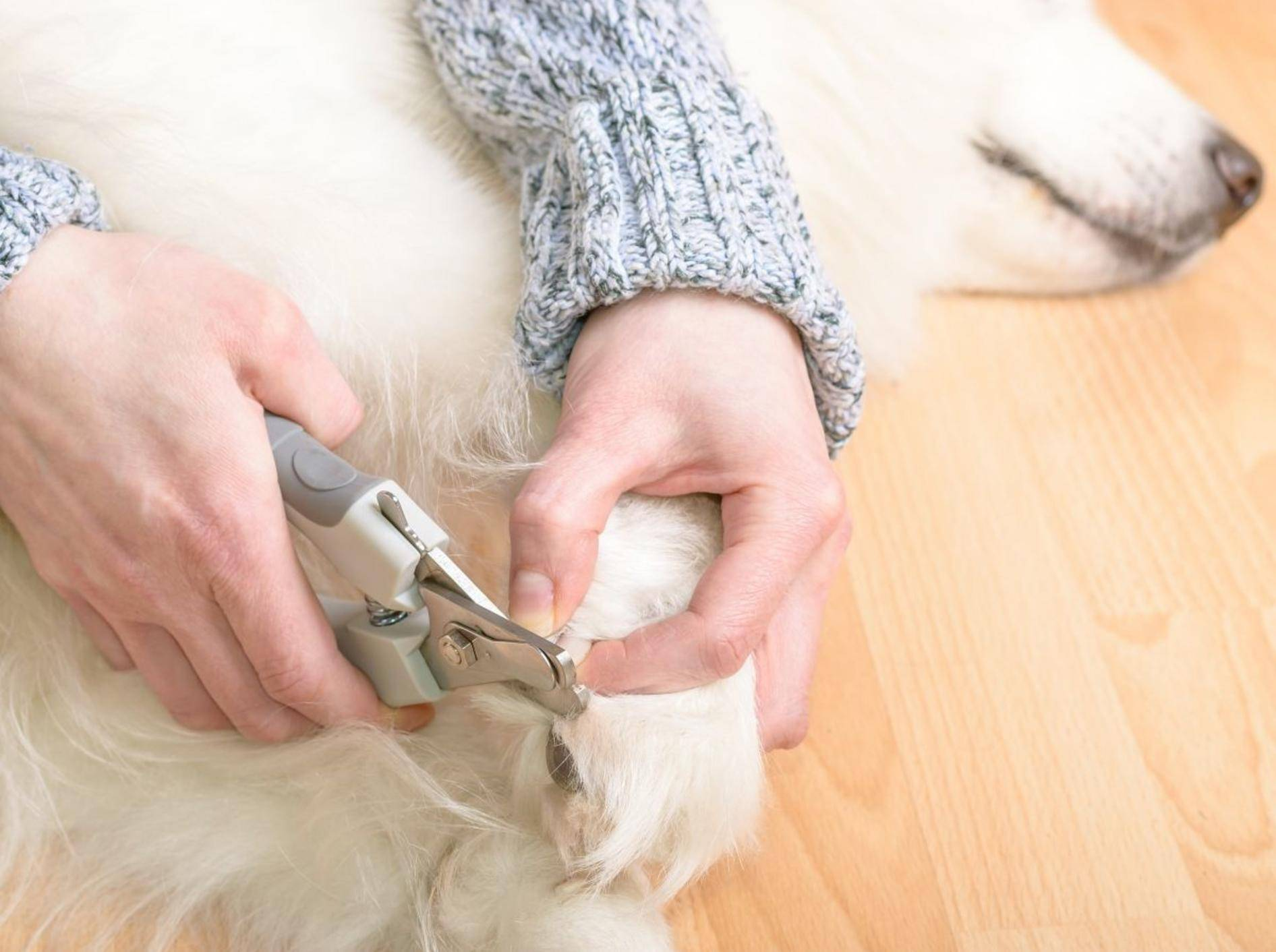 Wichtig für das Krallenschneiden zu Hause: Das passende Werkzeug — Bild: Shutterstock / Imfoto