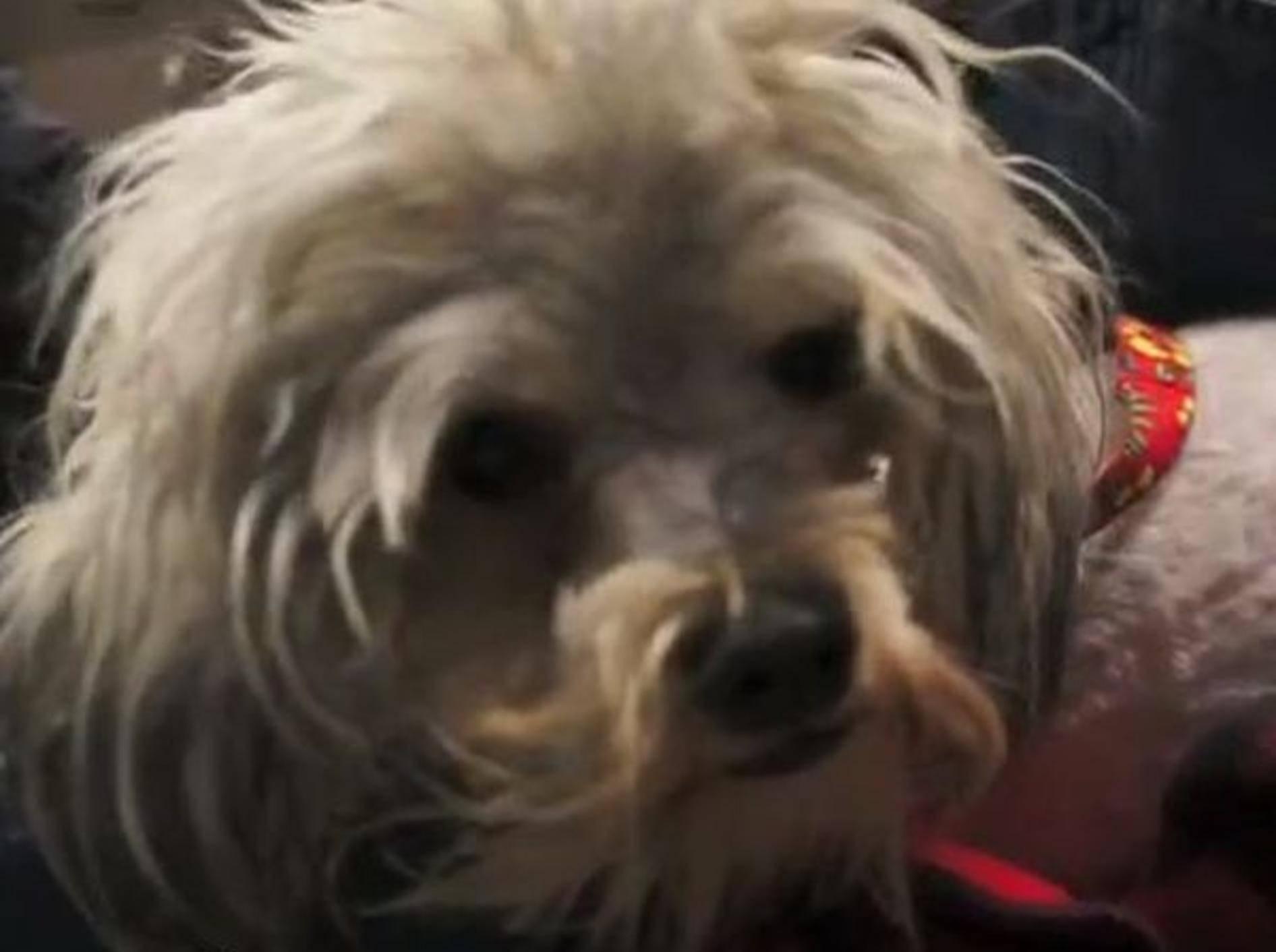 Blinder Hund Tessa — Bild: Youtube / billfoundationdog