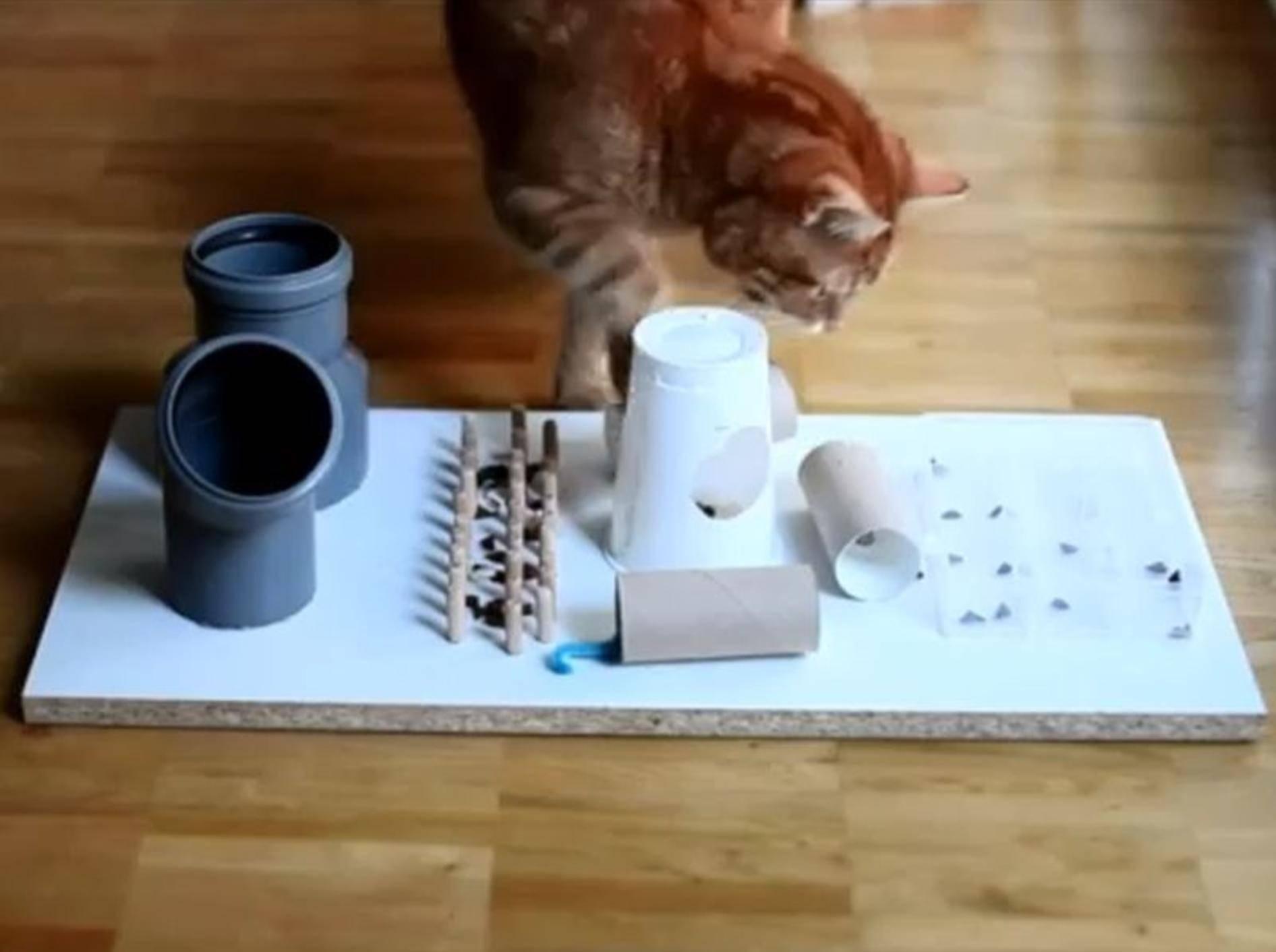 Hochkonzentriert: Eine Katze mit ihrem Fummelbrett – Youtube / leoflixi