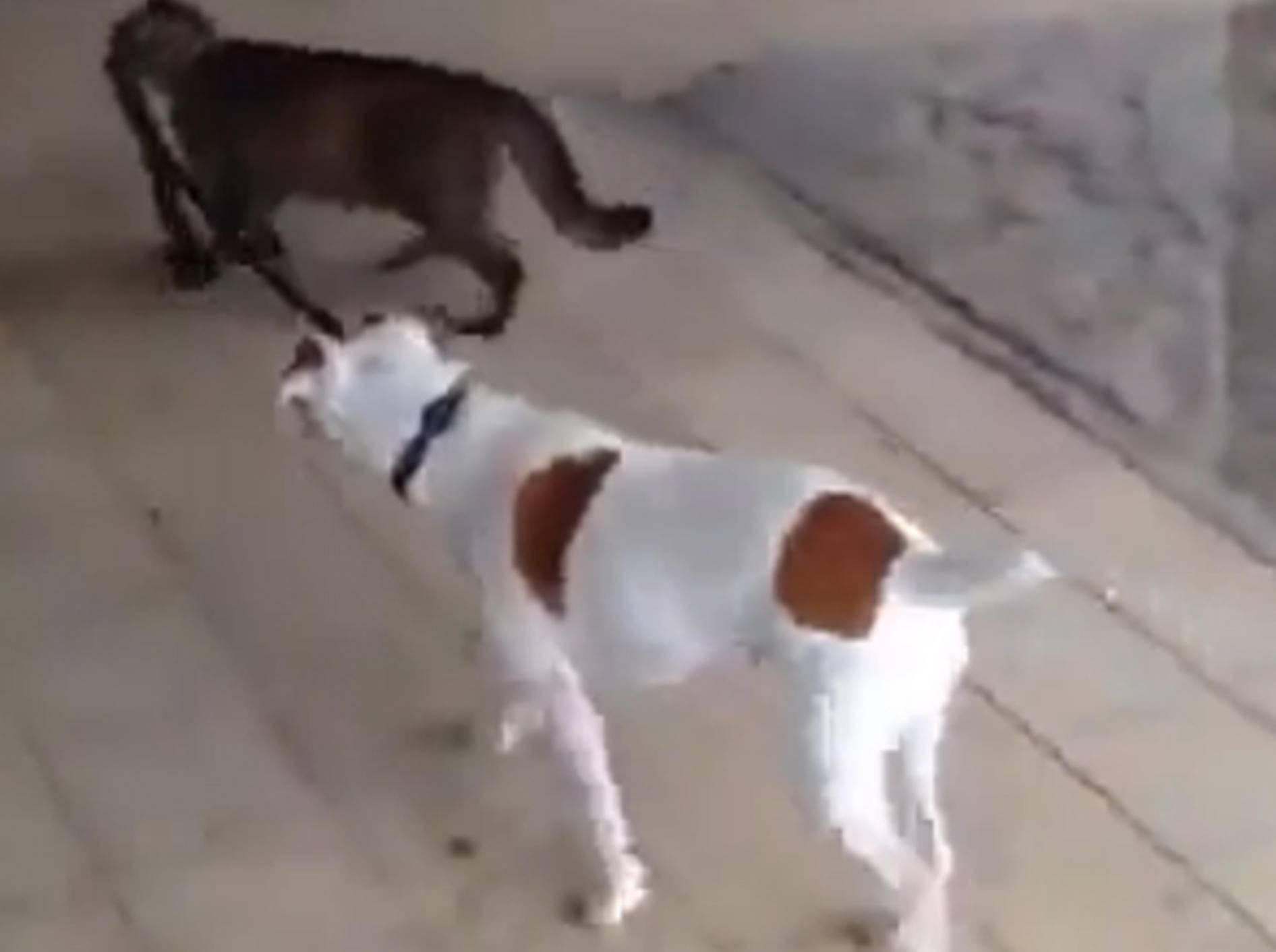 Katze führt einen Hund an der Leine zum Gassigehen aus