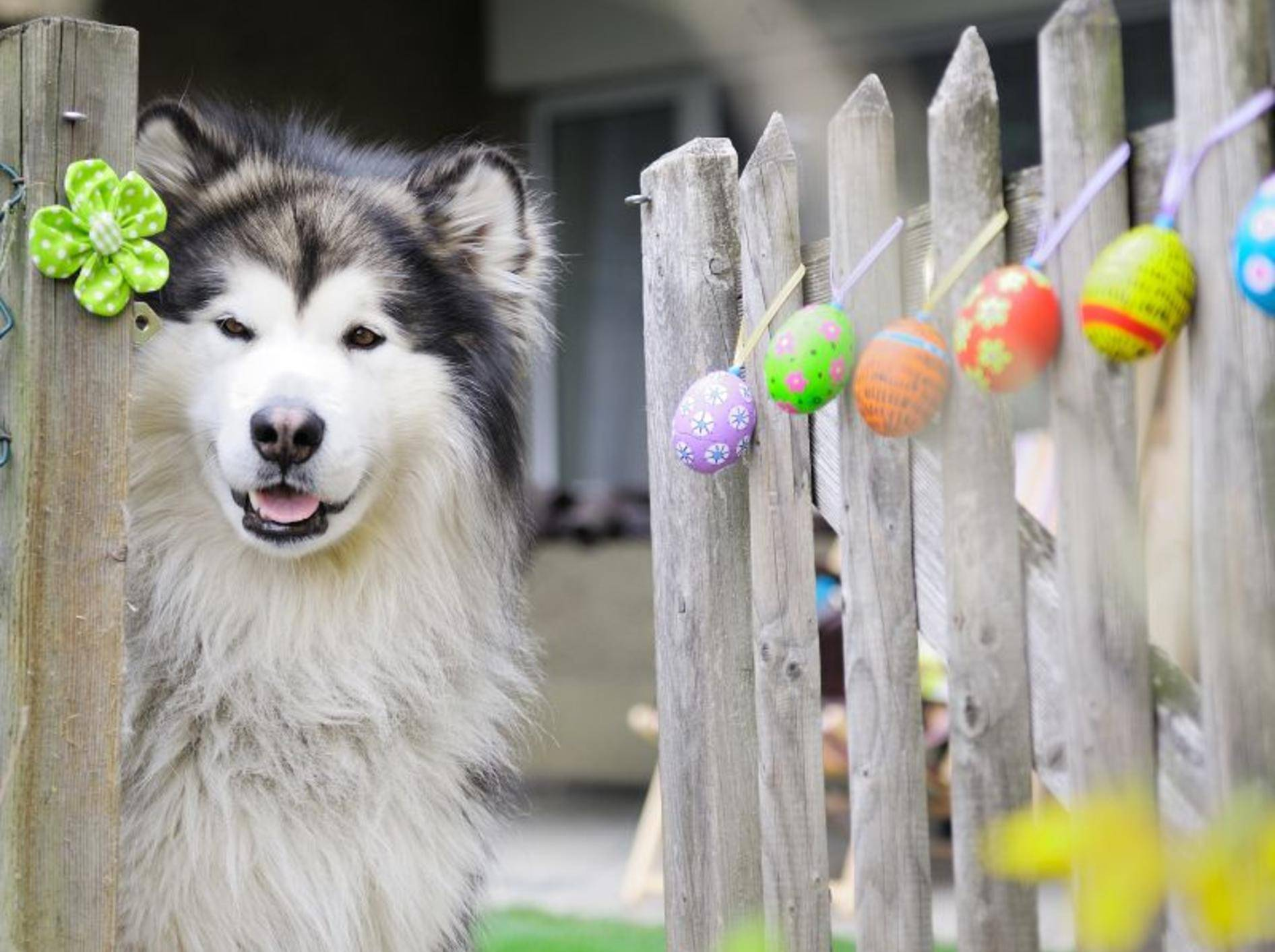 Auch Hunde kann man ins Osterfest integrieren — Bild: Shutterstock / Zanna Demcenko