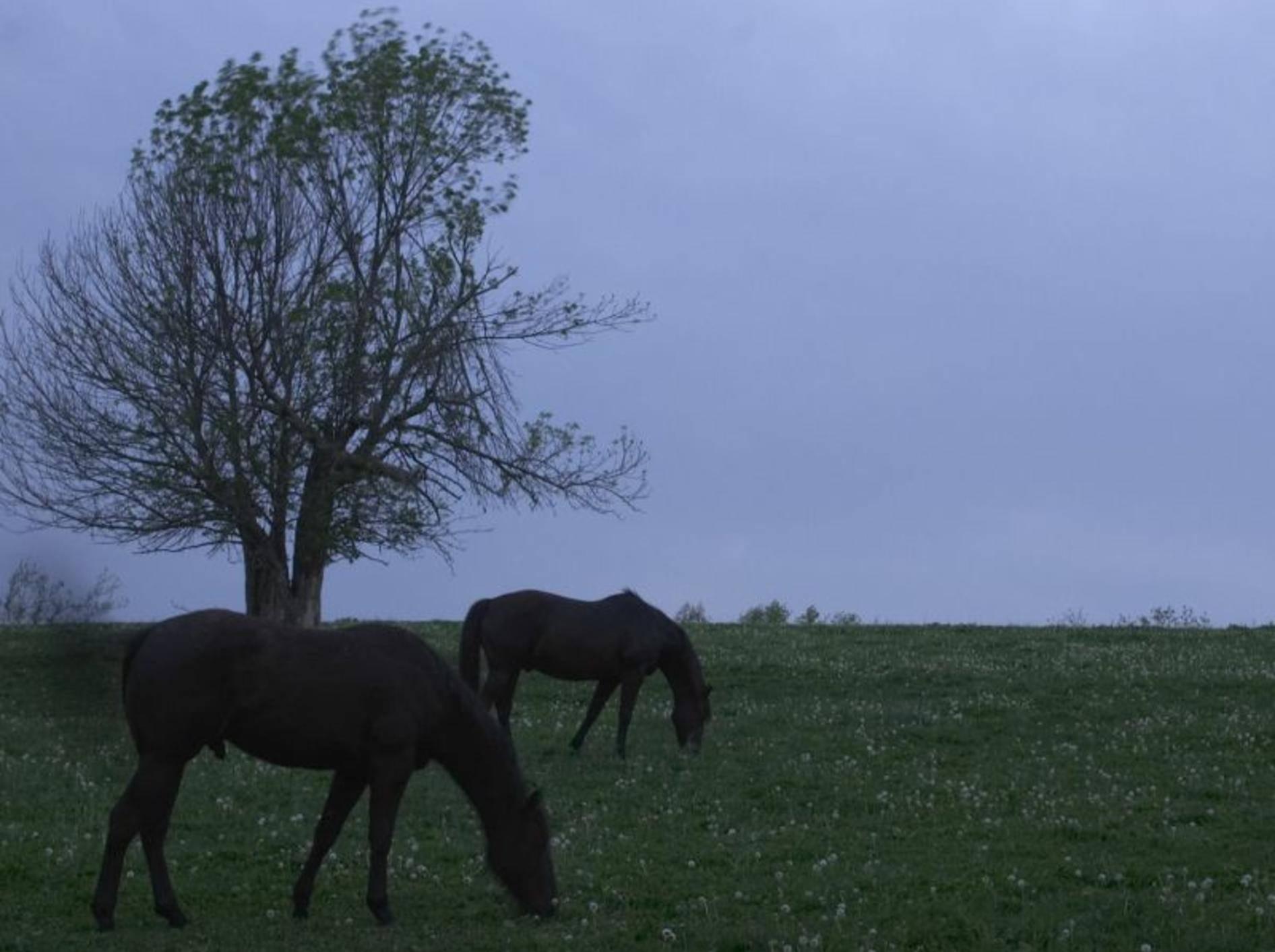 Tierquäler schießt in Jena auf Pferde und Kühe — Bild: Shutterstock / Robert C. Tussey III