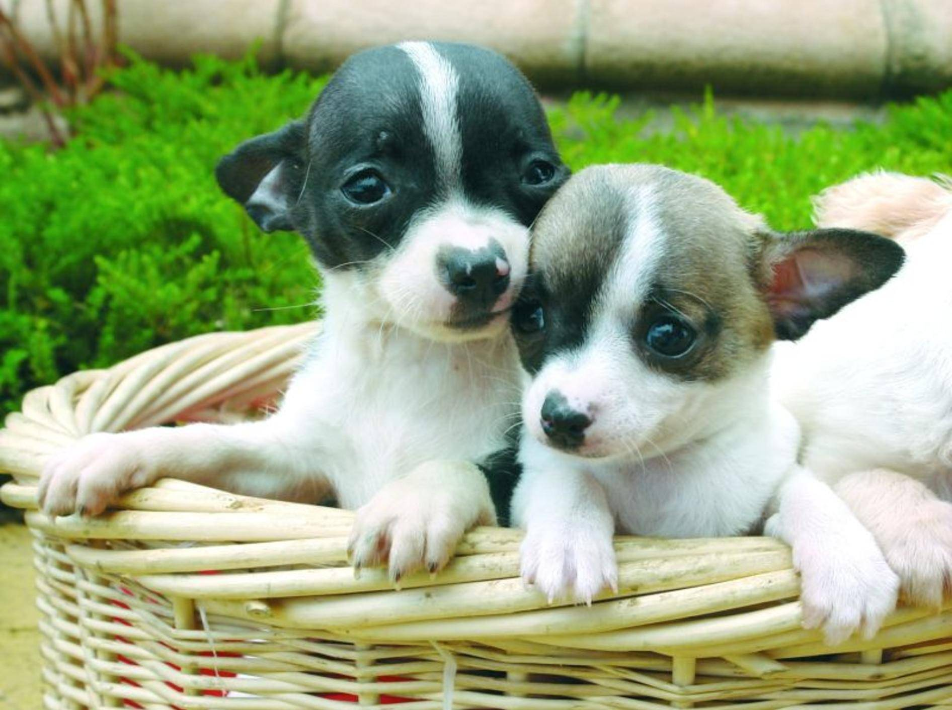 Hübsch und praktisch: Hundekorb aus Holz — Bild: Shutterstock / pixshots