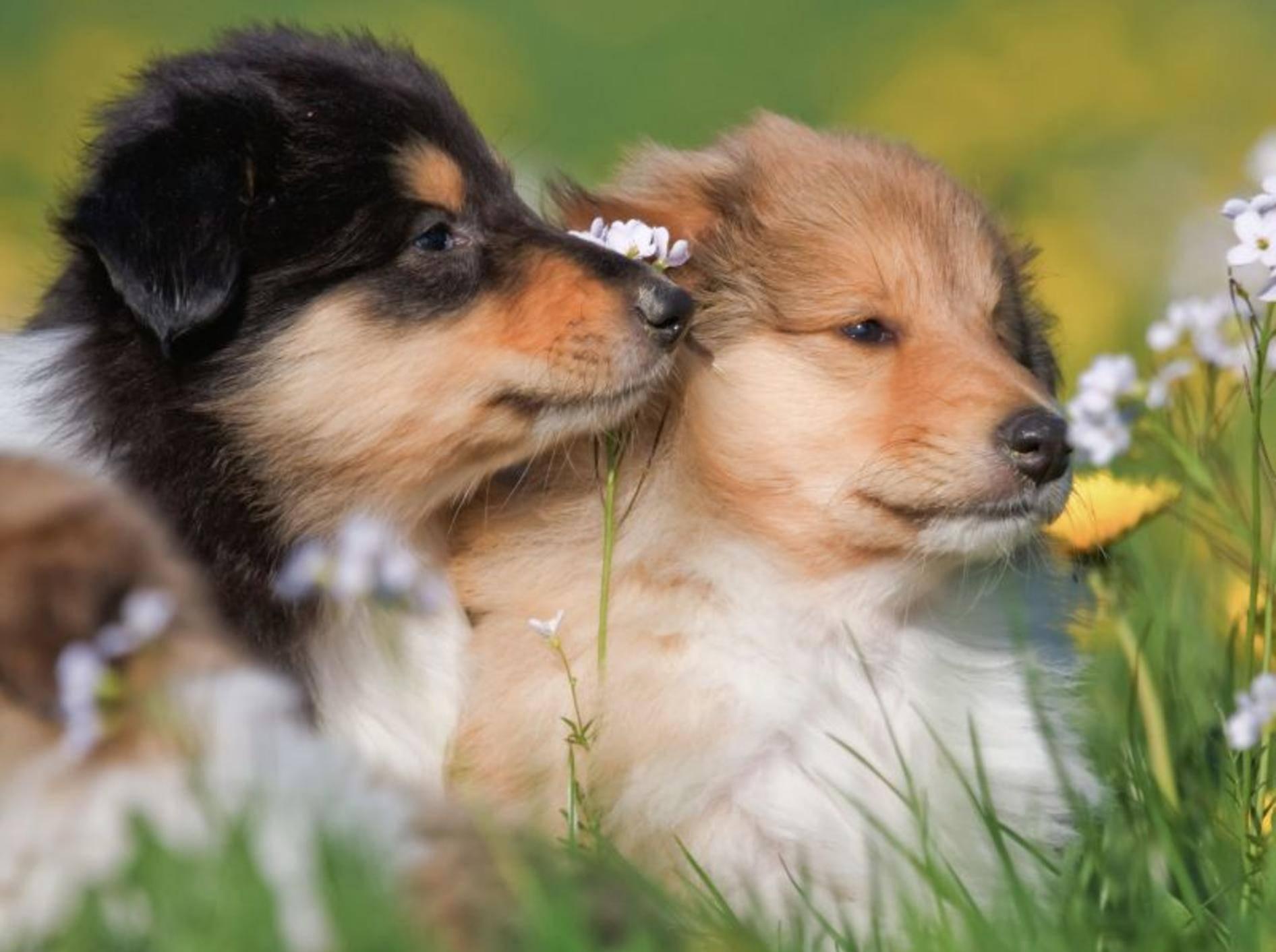 Hundegeschwister sind toll weil ... man mit ihnen die Sonne genießen kann — Bild: Shutterstock / Christian Mueller
