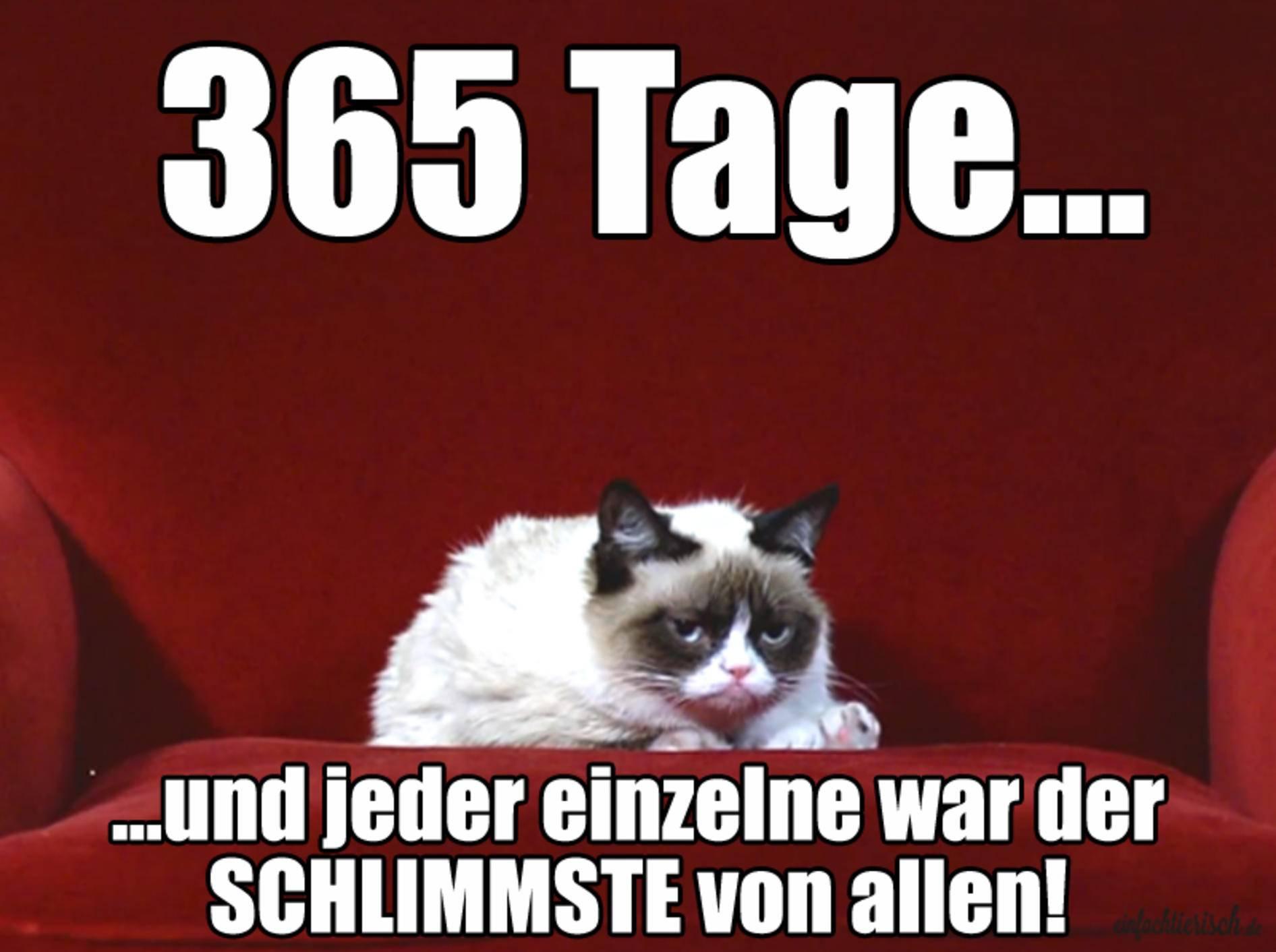 Grumpy Cat hat Geburtstag: Das heißt 365 schlimme Tage