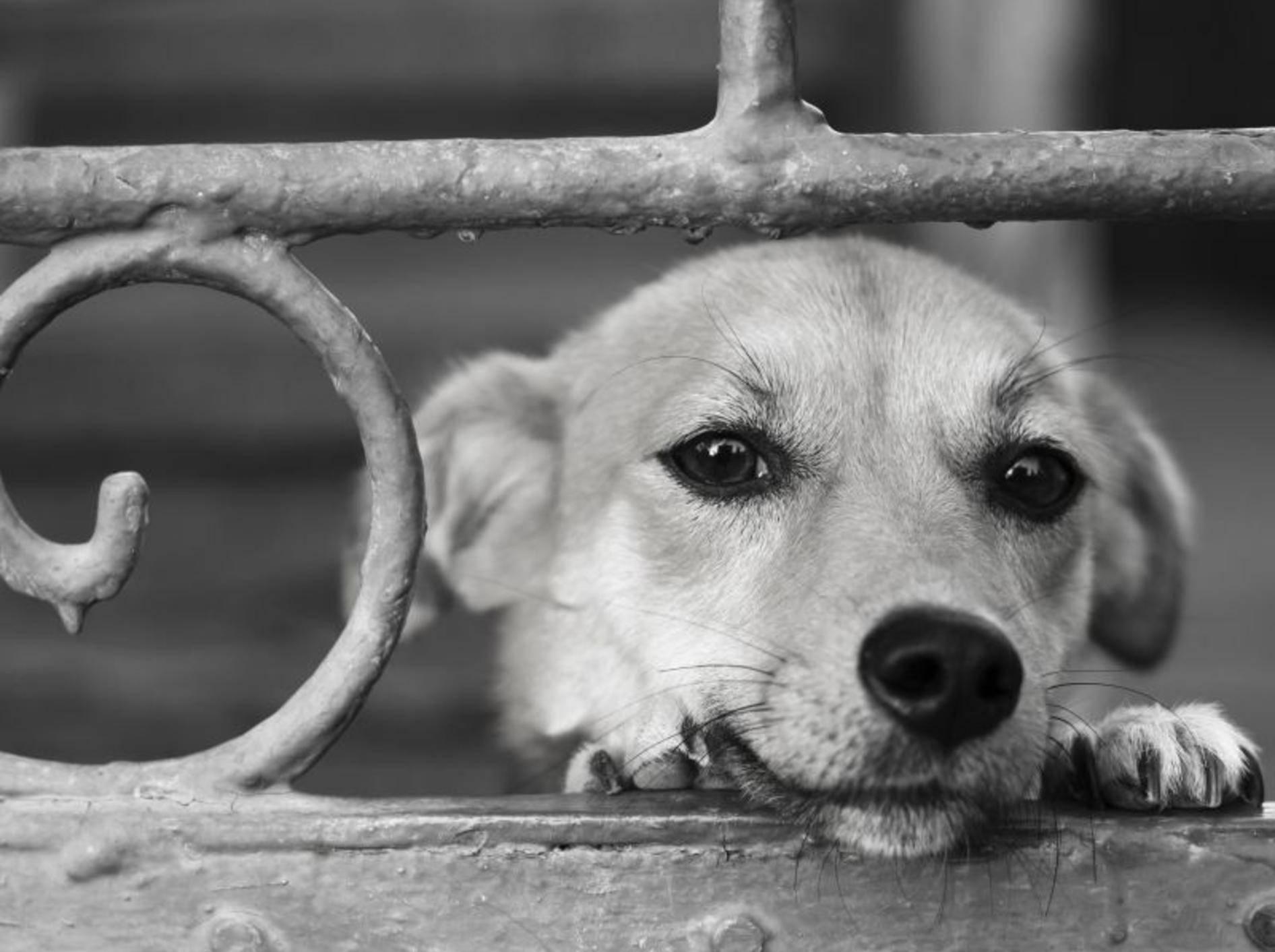 Ein schöner Mischling in Schwarz-Weiß-Optik — Bild: Shutterstock / NikP